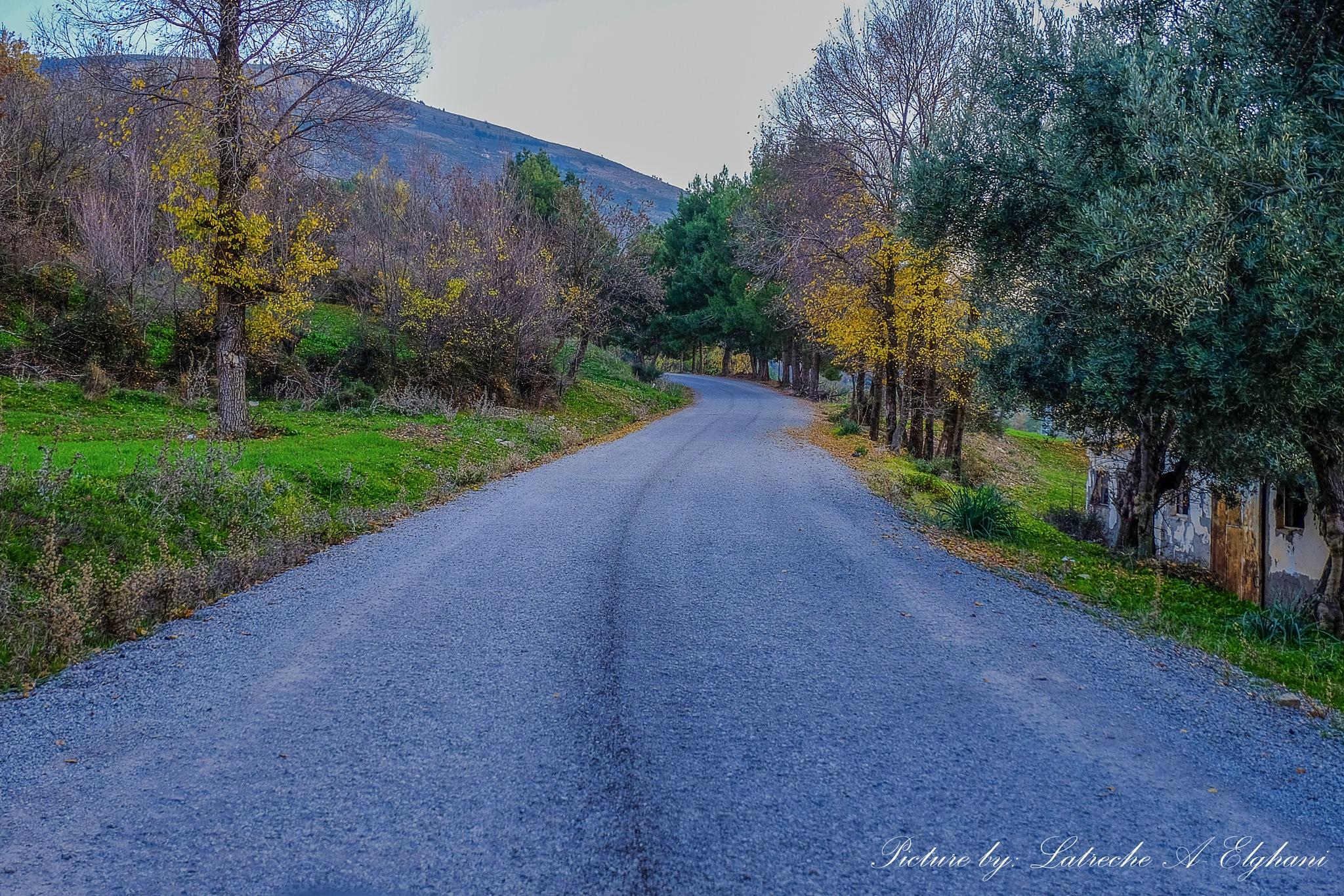Autumn 2015 by latreche71