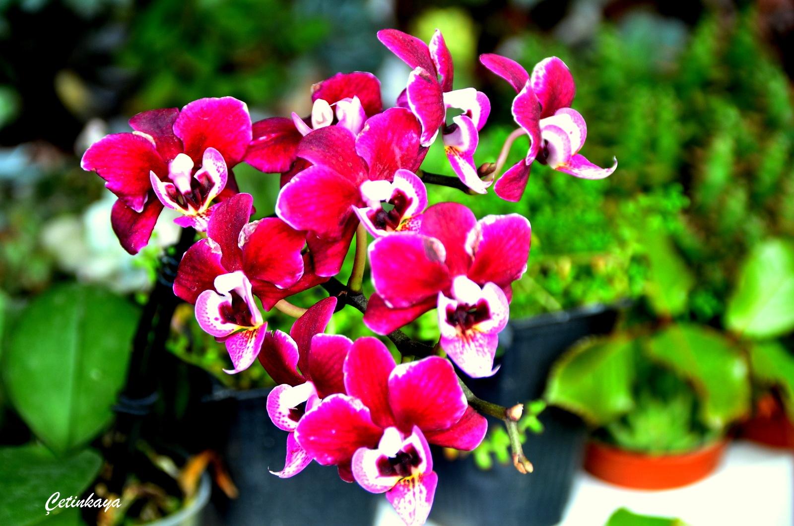flower by minas_cetinkaya