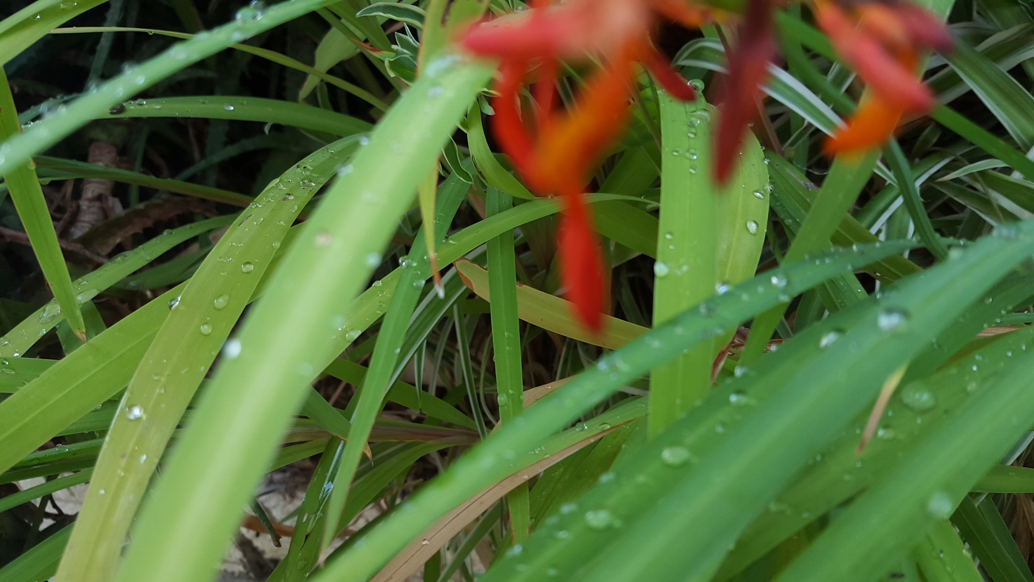 Water drops by Seekatjie