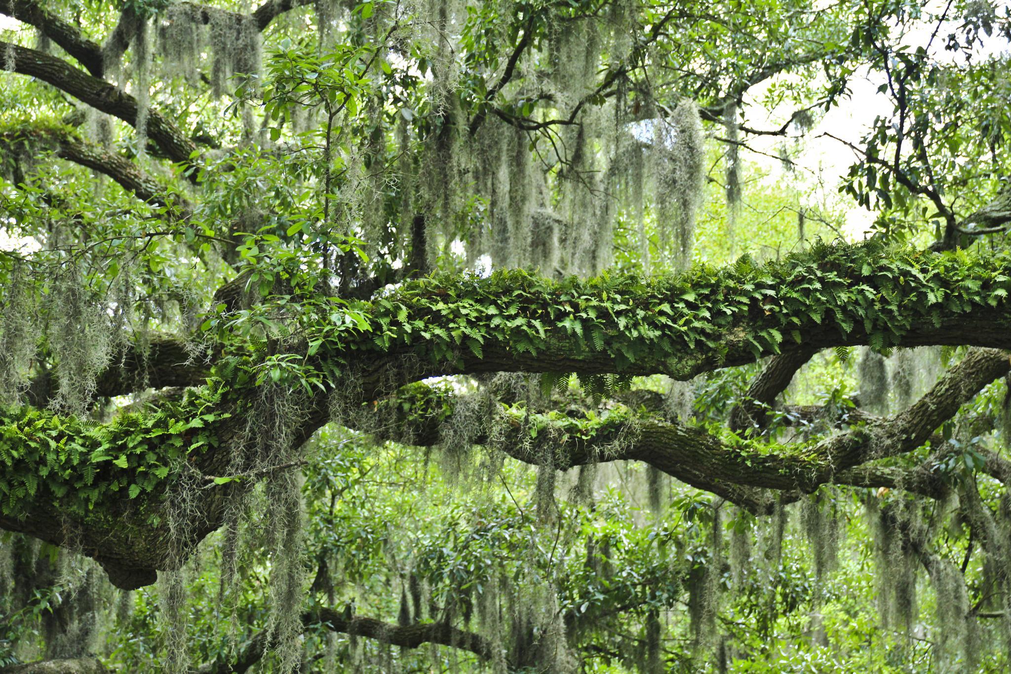 Savannah Greens by momtaxi711
