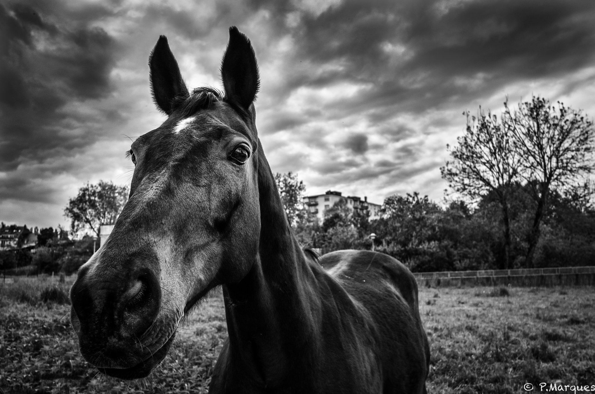 Cheval by Philippe