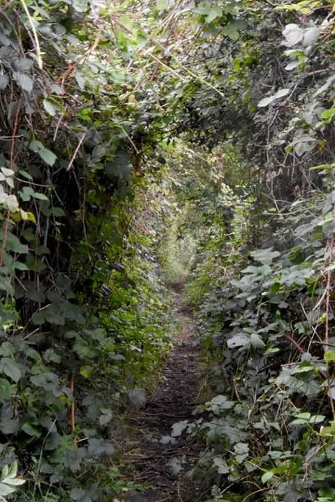 path through... by Karl