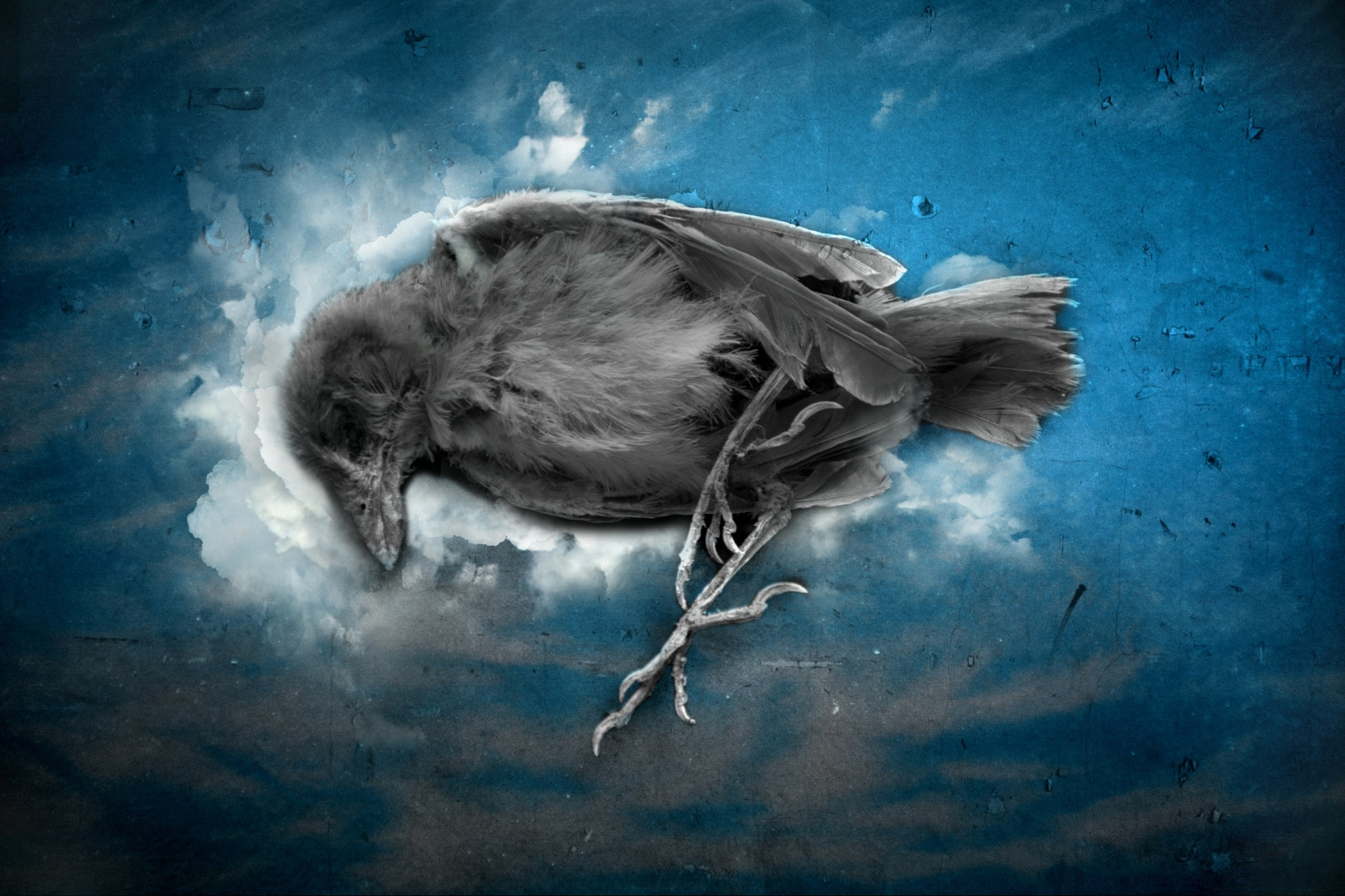 flying deep by Milad Eslamzadeh