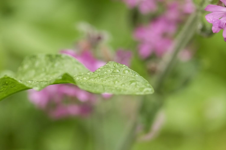 Raindrops  by Fotobychristina
