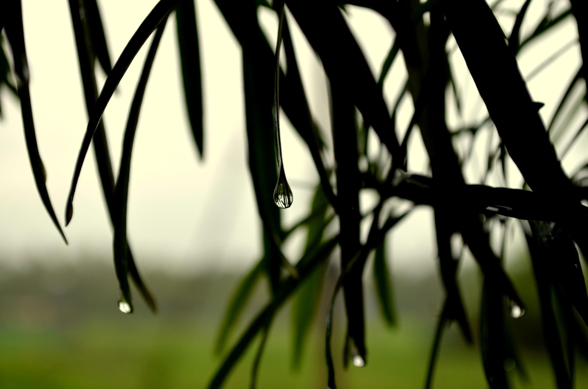 Monsoon Showers by Ravindra Kulkarni