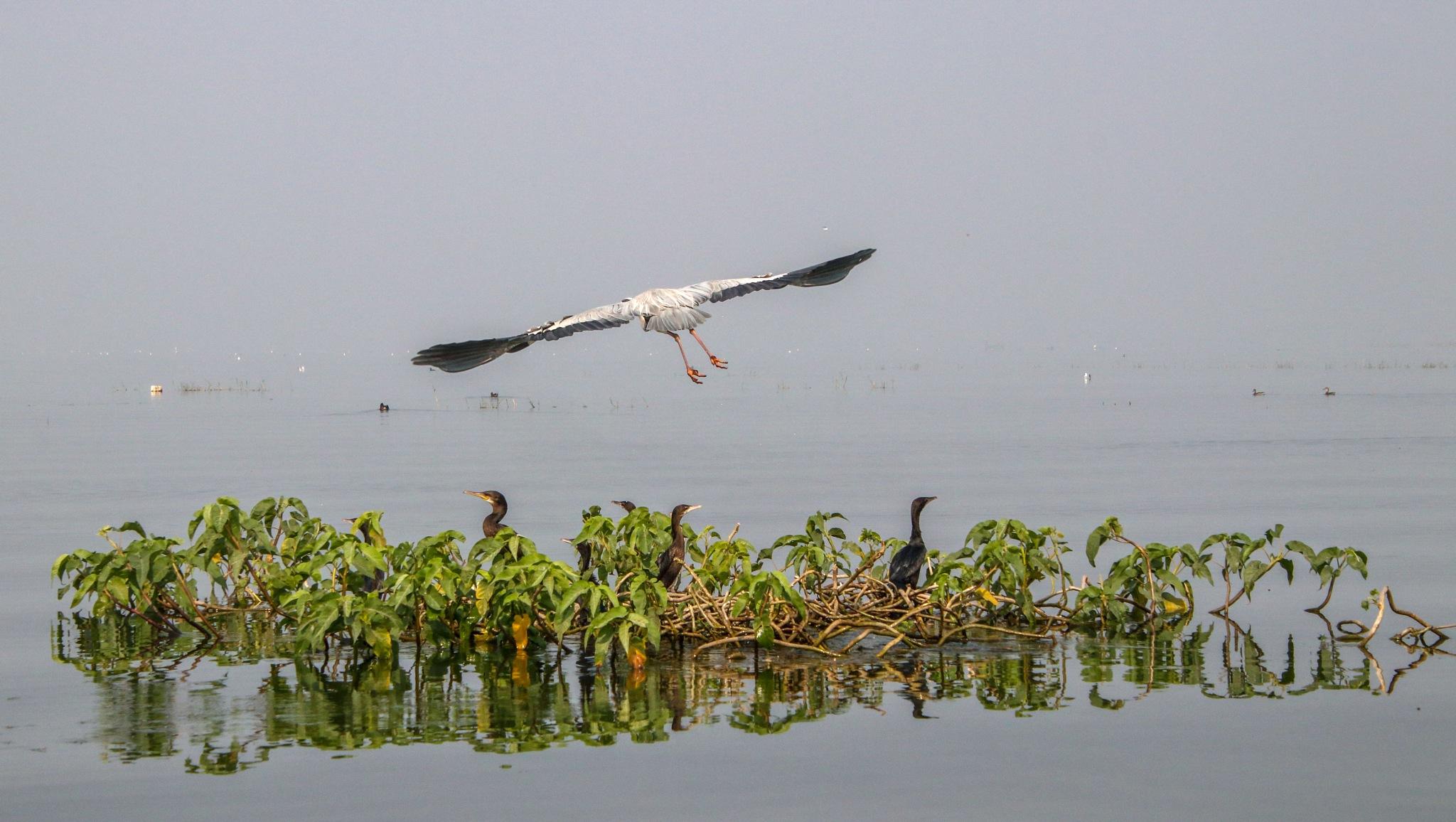 Perfect take off by RAMANUJAN