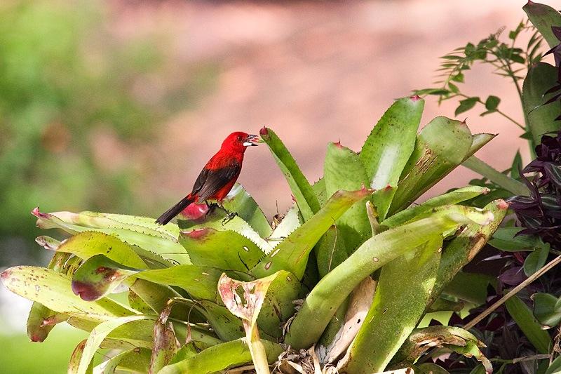 Pássaro e Bromelia by JoseSenna