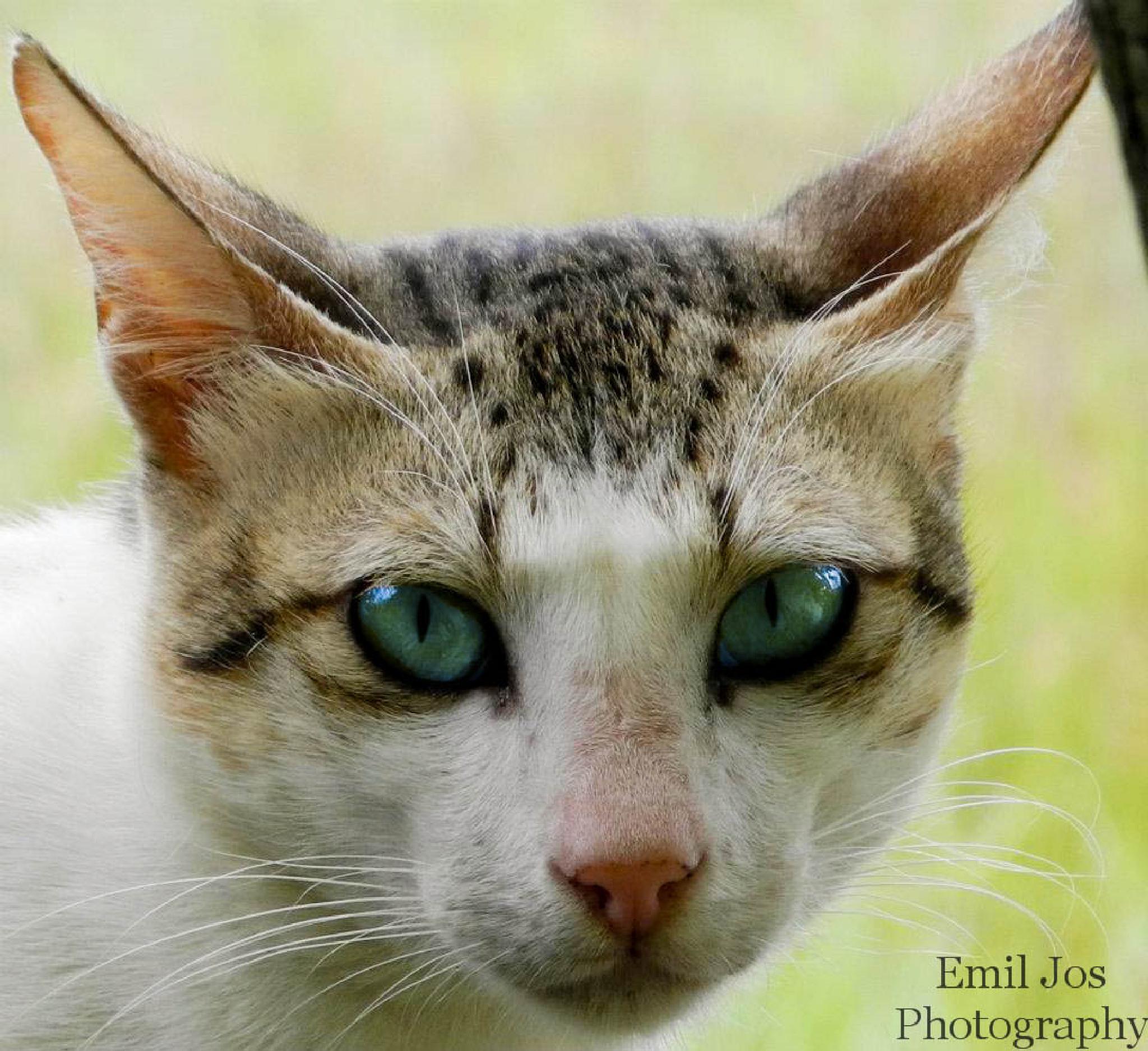 cat eyes by emiljosthomas