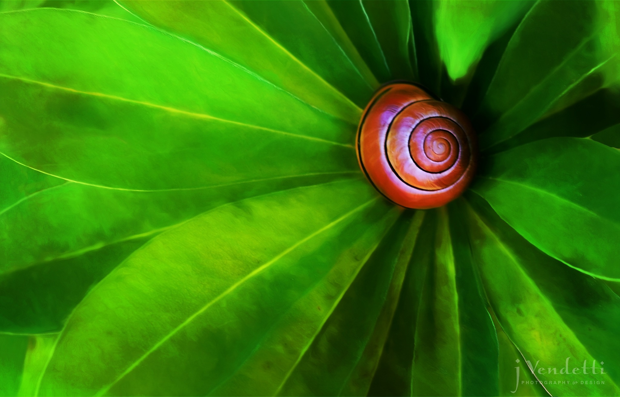 Snail on Lupine Leaf by Jessica Vendetti