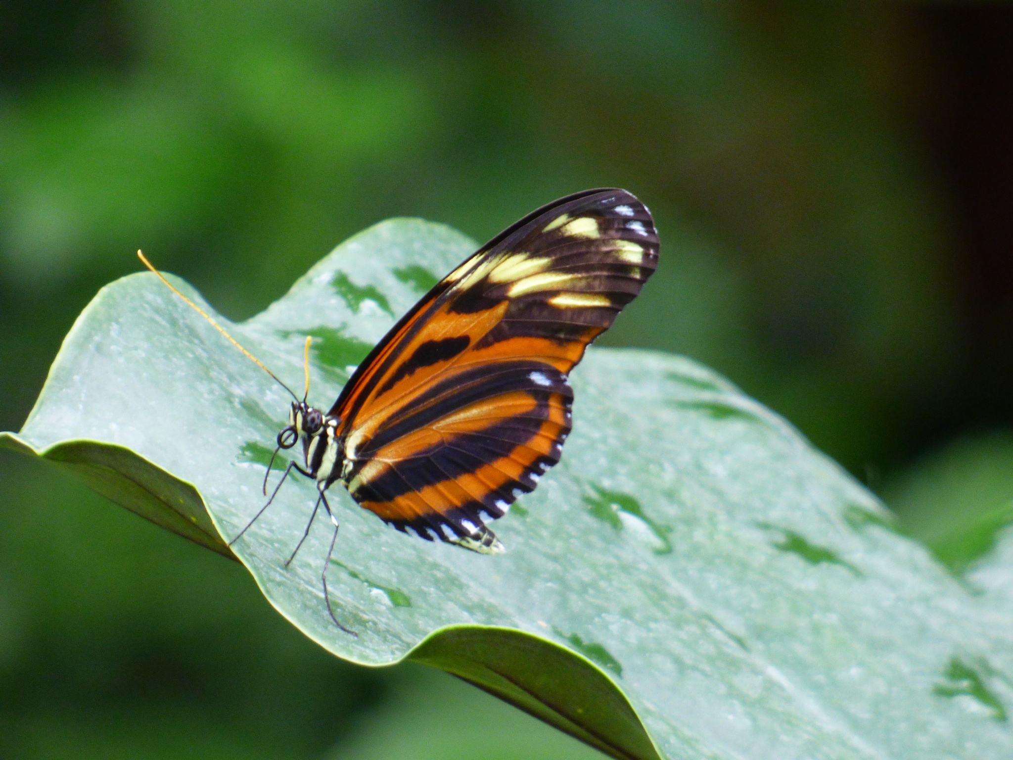 Photo in Nature #butterfly #nature #beauty #insect #michigan