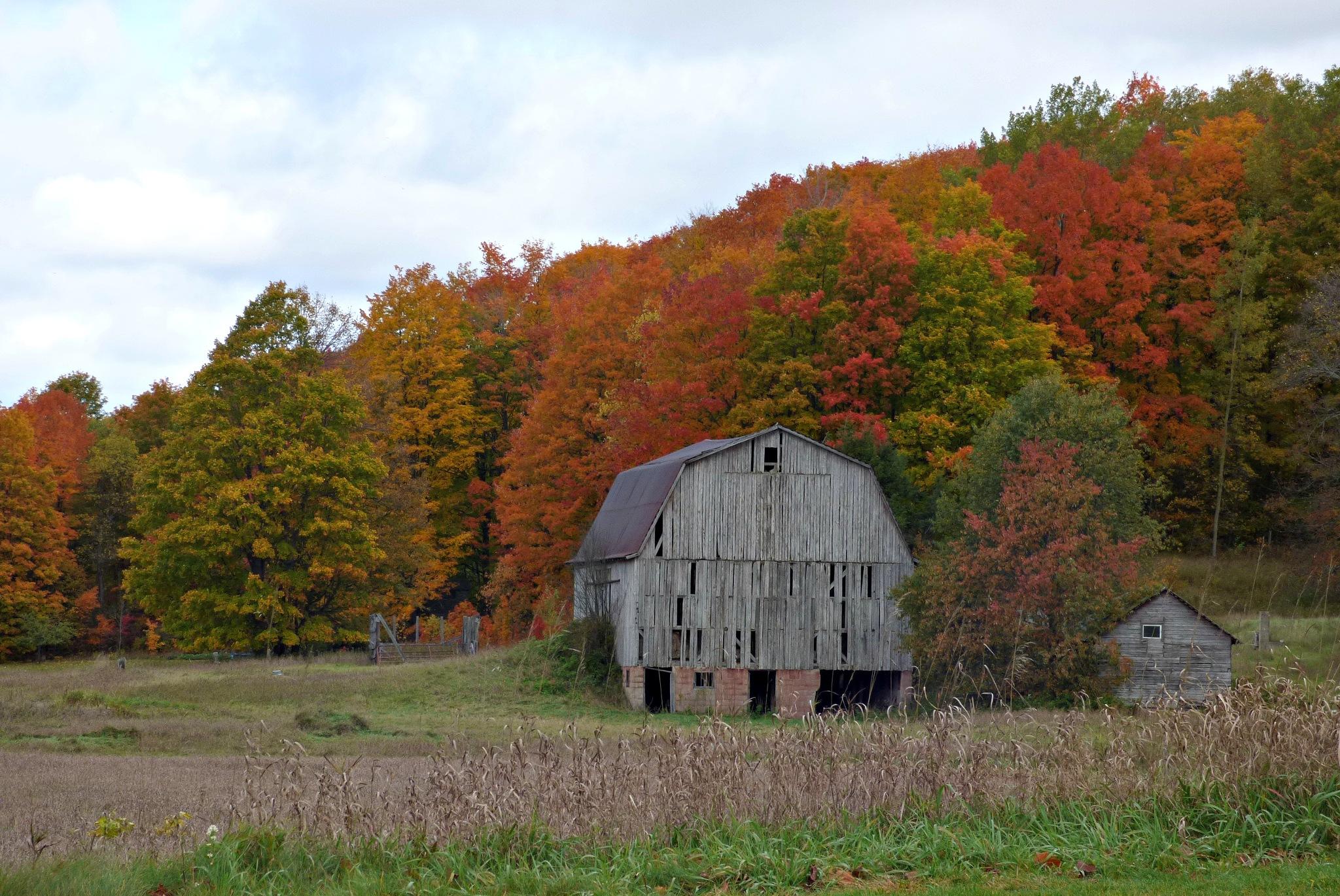 Northern Michigan Autumn by ScottWardPhotography