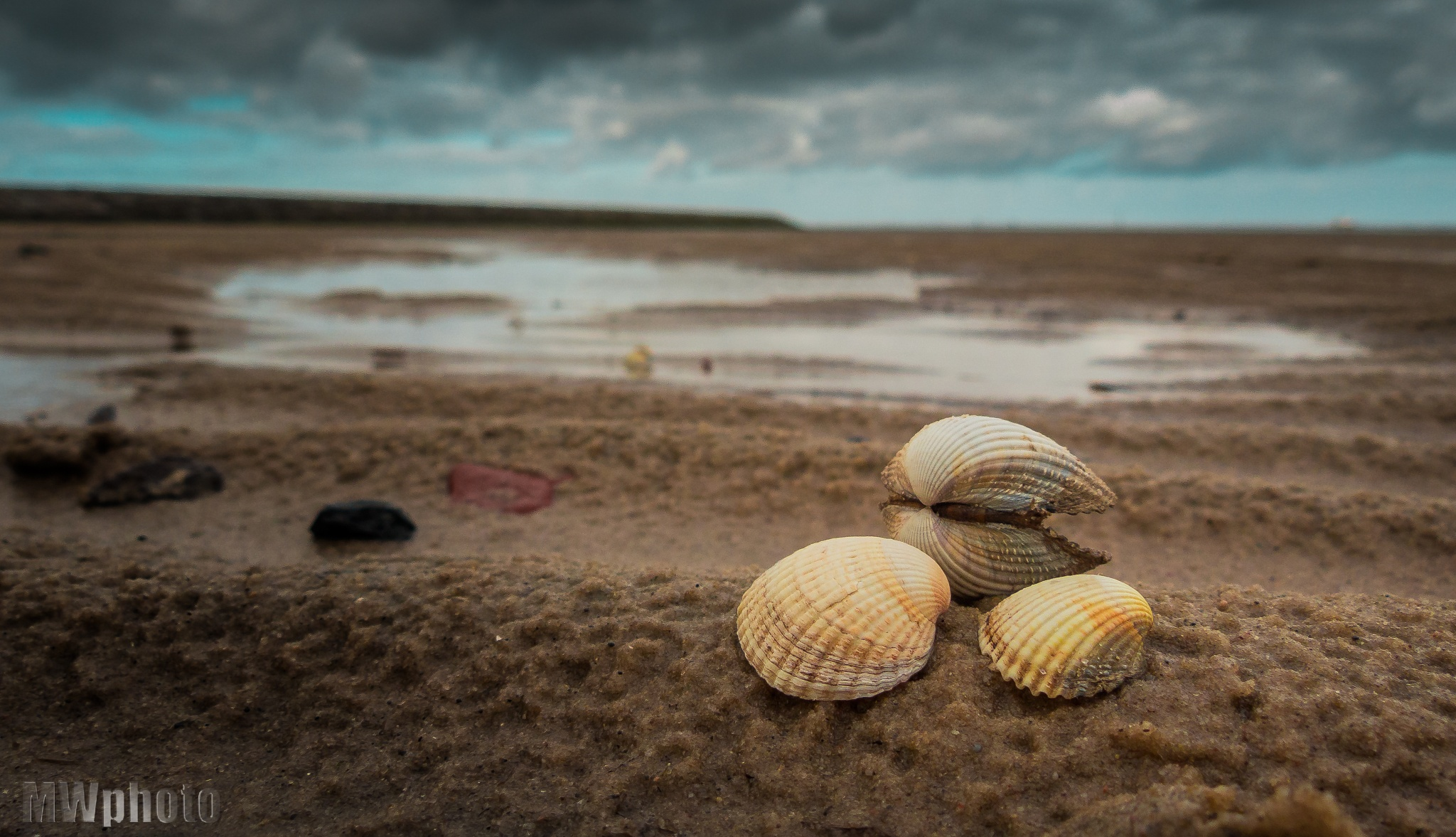 Shell at the beach by Liderschlag