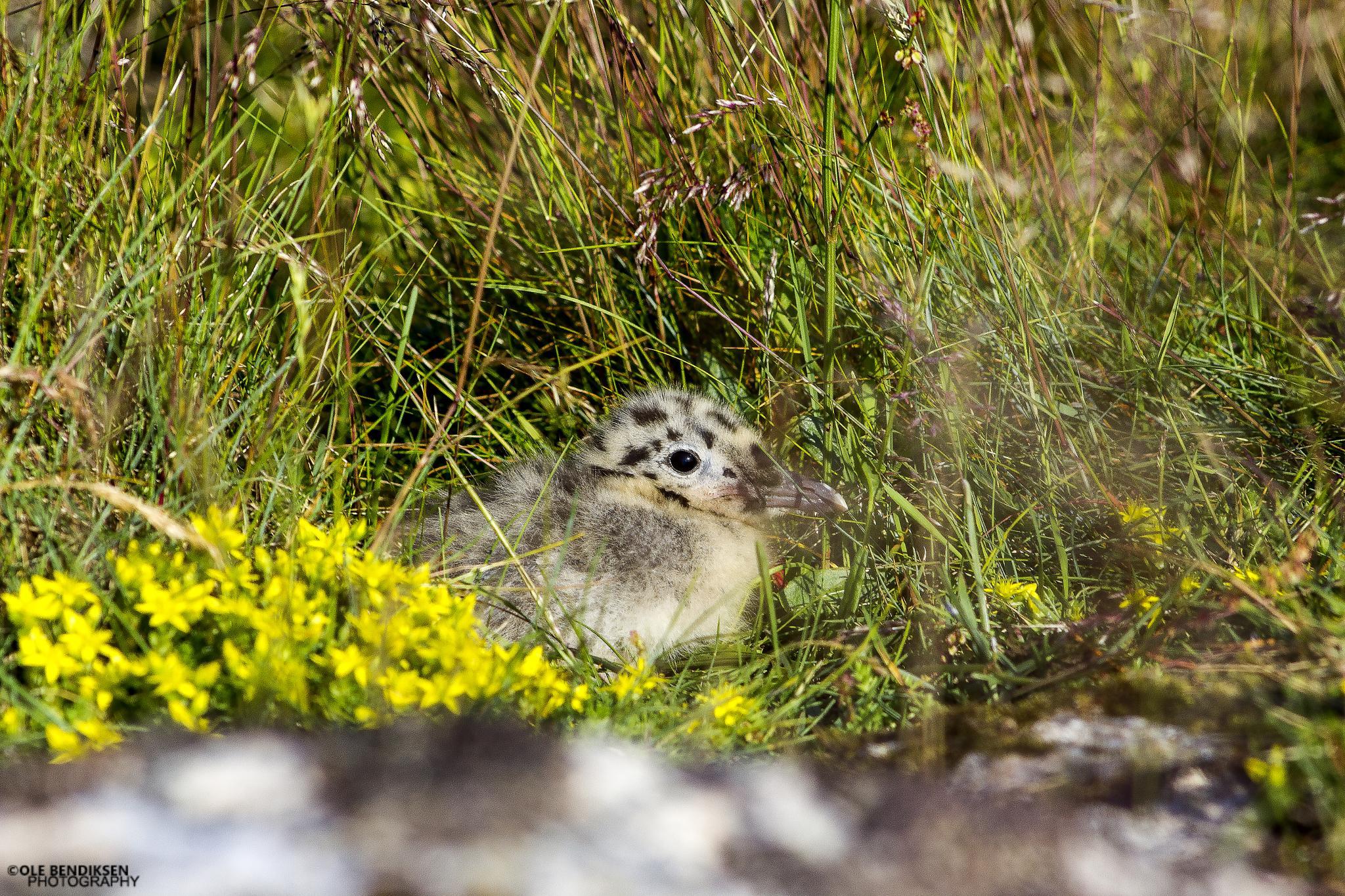 Photo in Animal #bird #innocent #summer #afraid #hiding