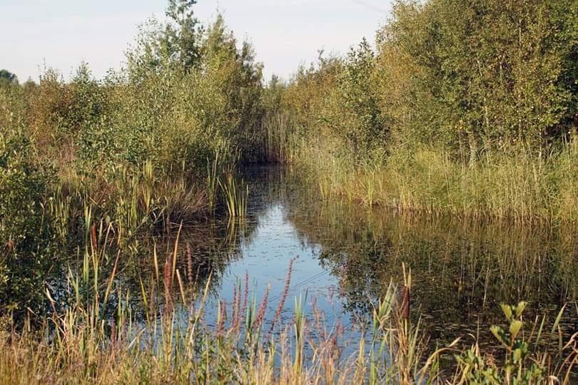 Quiet Pond by Ginnistam Photographic (Peter & Margaret Hardy)