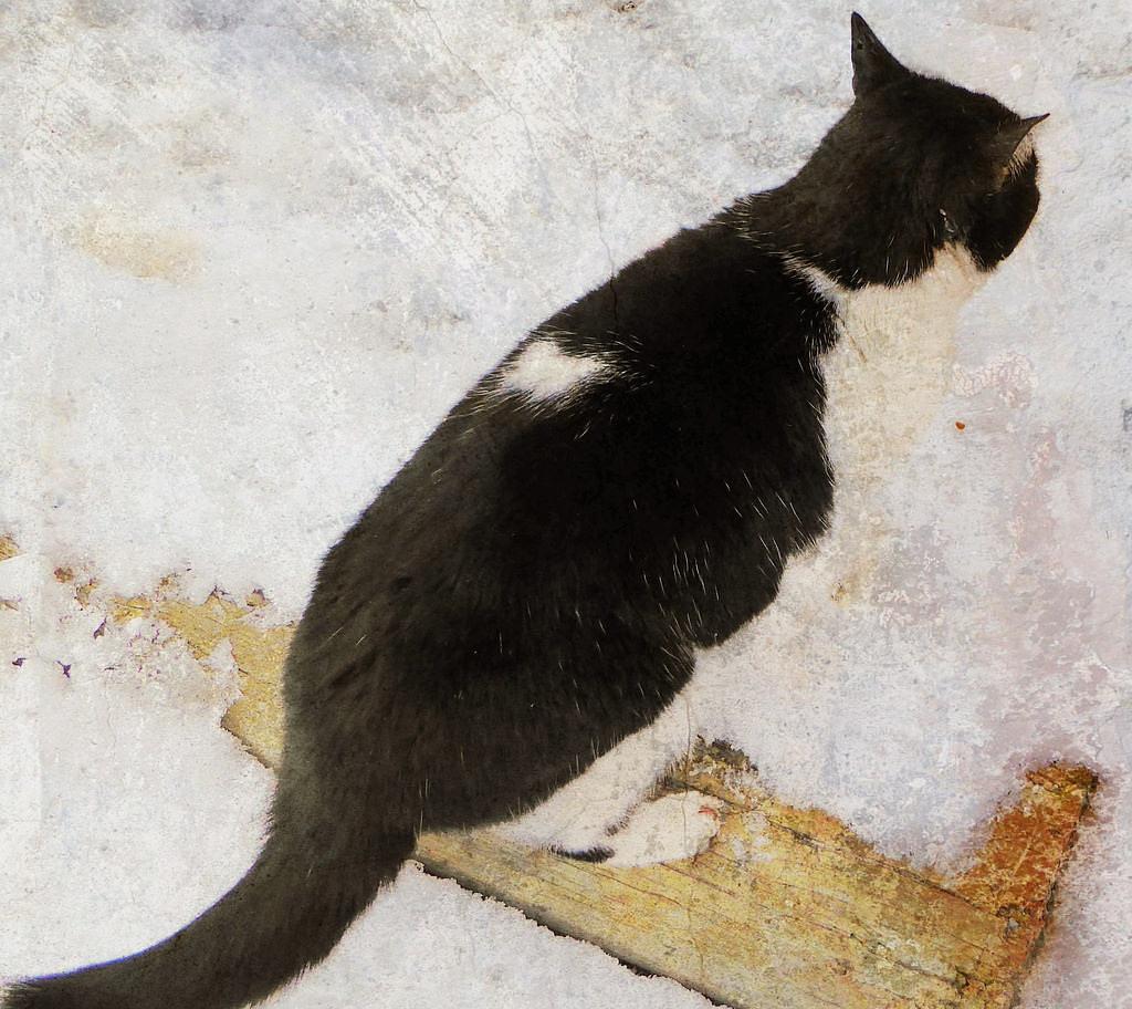 Félix le chat de l'écurie  by zazem3