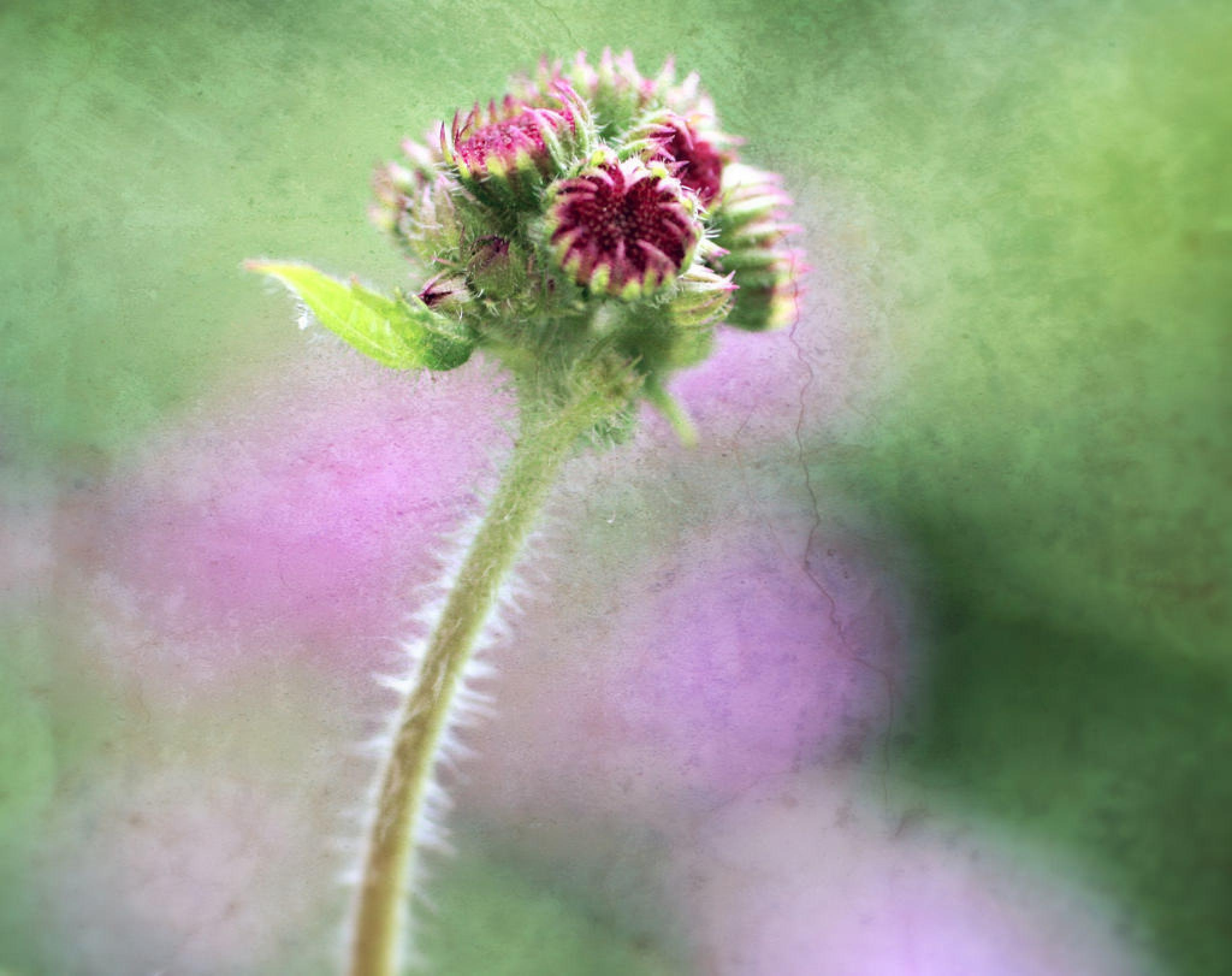 bouquet de bourgeons  by zazem3
