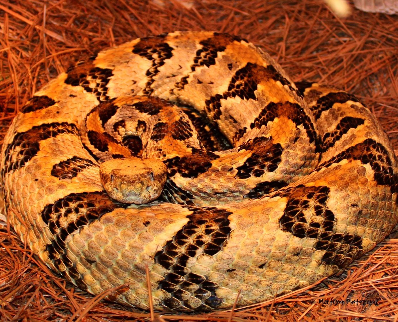 Photo in Animal #snake #animals #reptiles