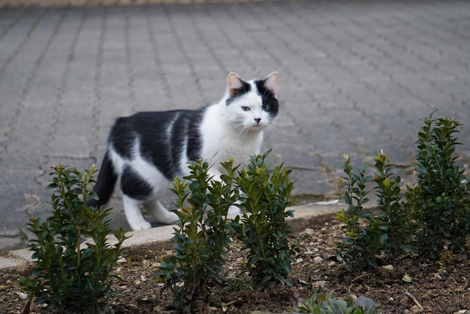 Katze by SUNNY_MK5