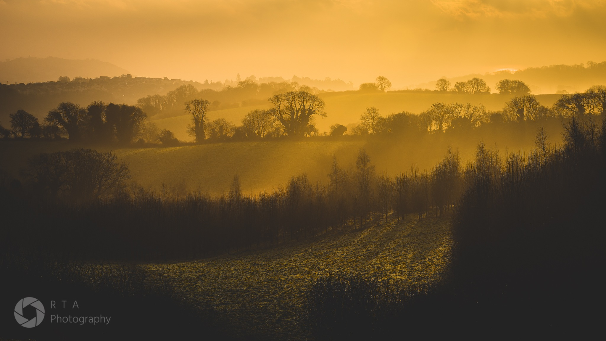 Golden Light by RTA Photography (Ray Abrahams)
