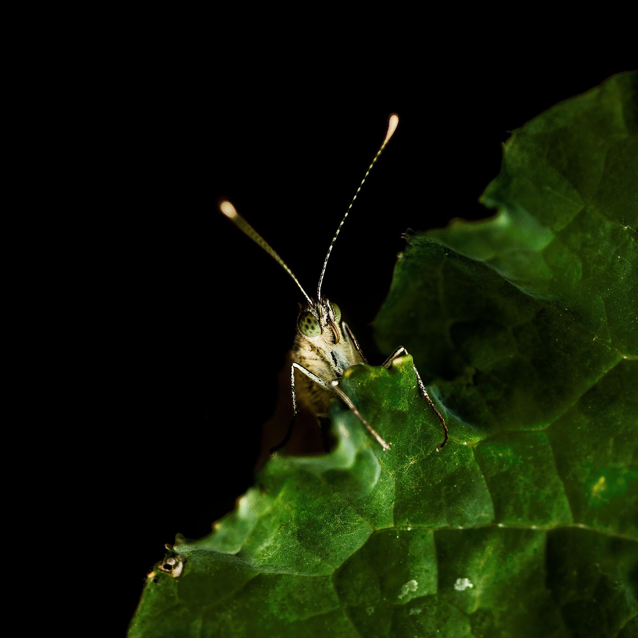 Green by Lynn Emery