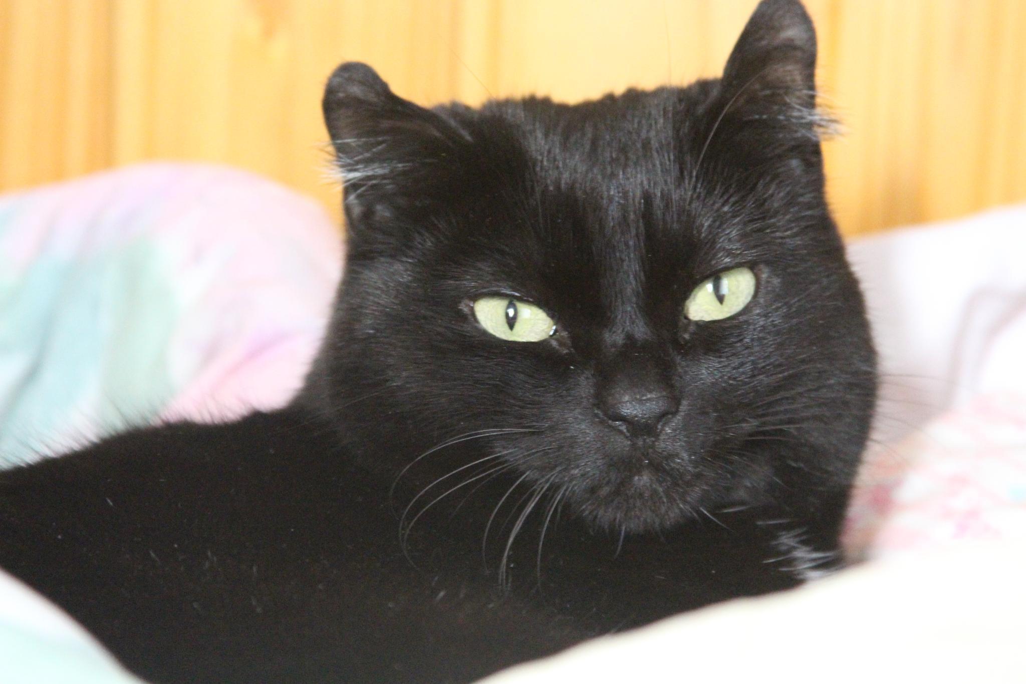 Bubu, my black cat by meiferdinando