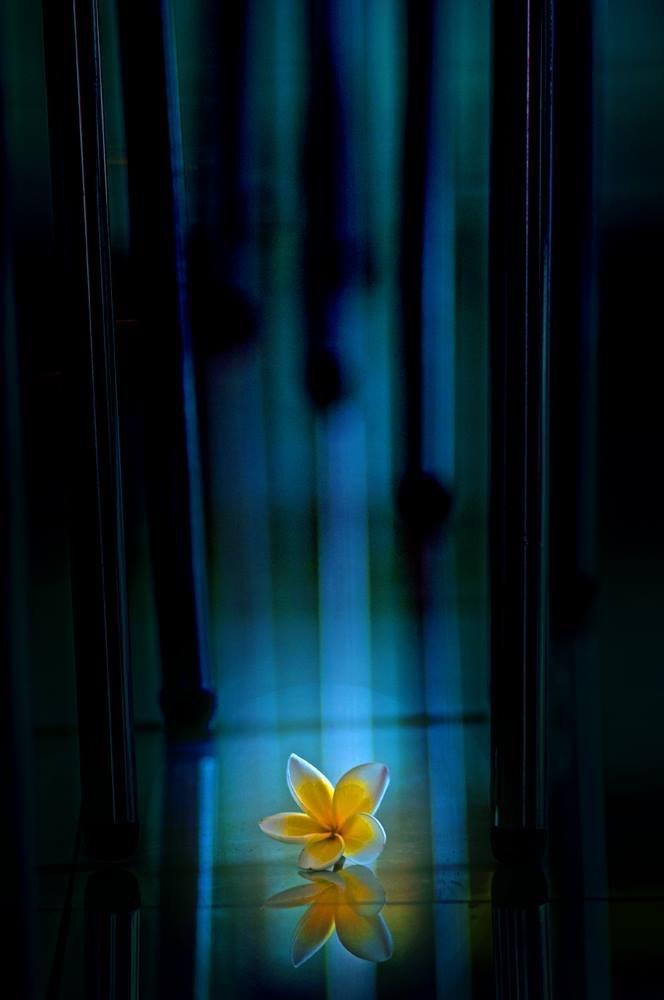 Flower in blue by Icon Lekziess