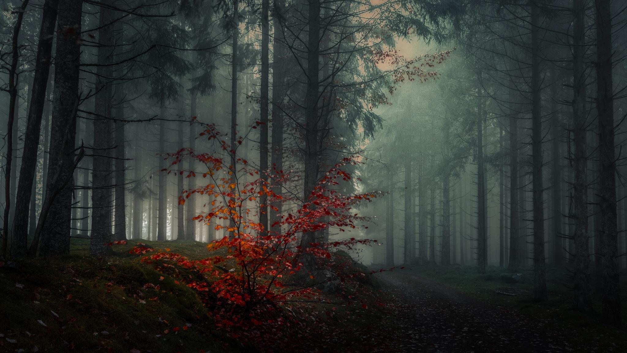 Burning bush by Göran Ebenhart