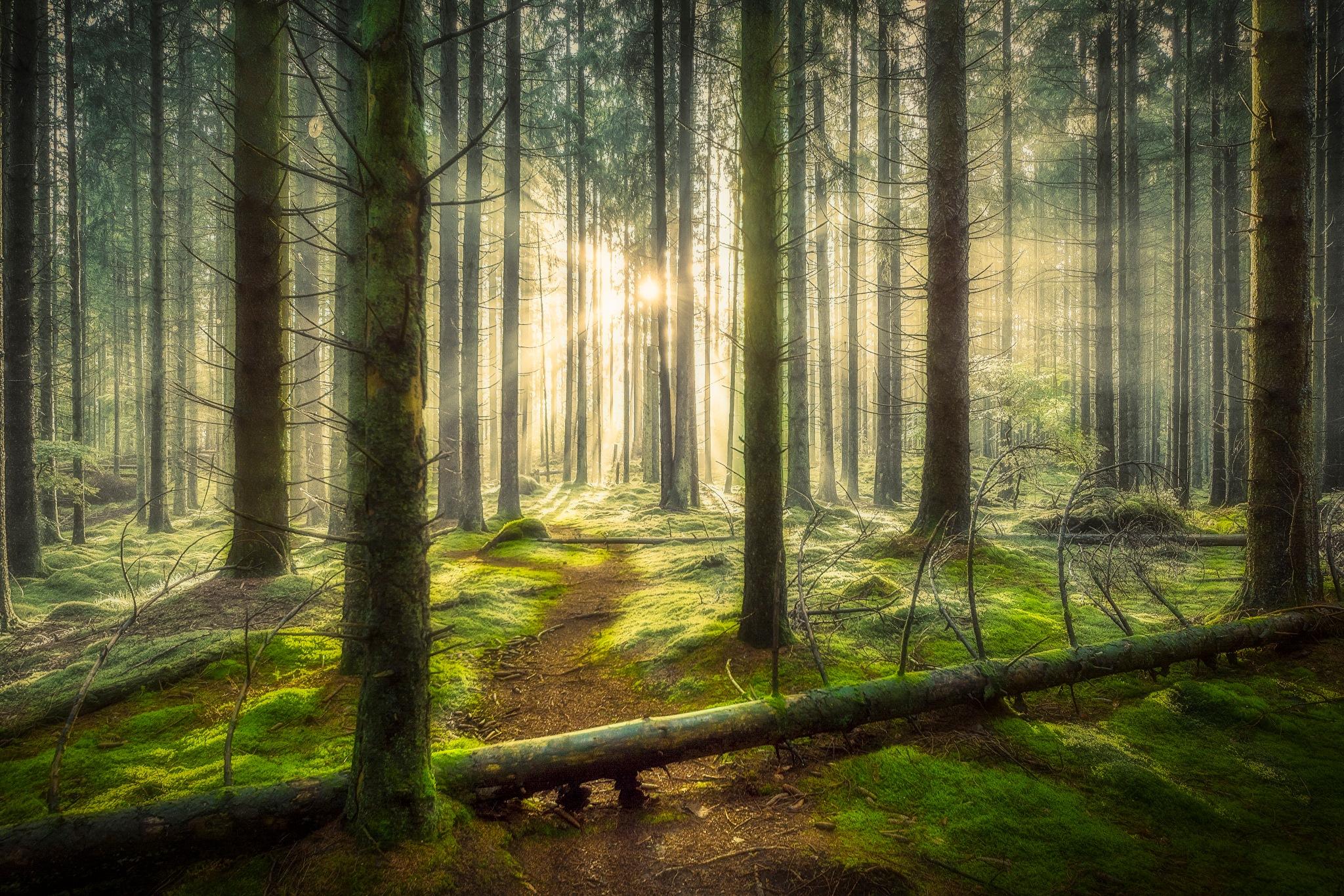 Magcial woodlands by Göran Ebenhart