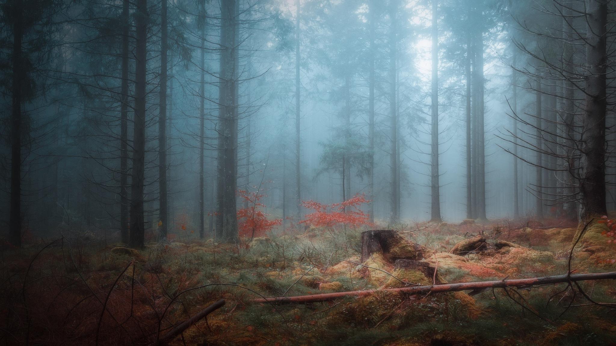 The Glade by Göran Ebenhart