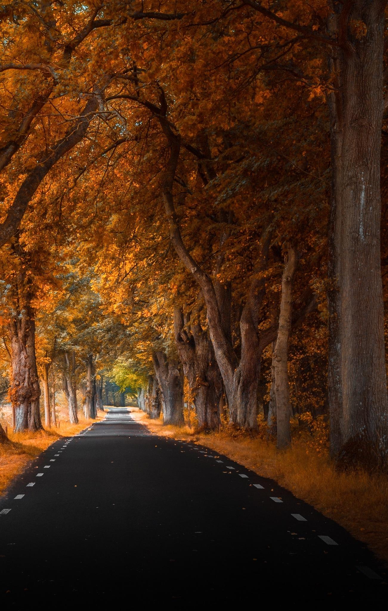 Rosendal road (part 3) by Göran Ebenhart