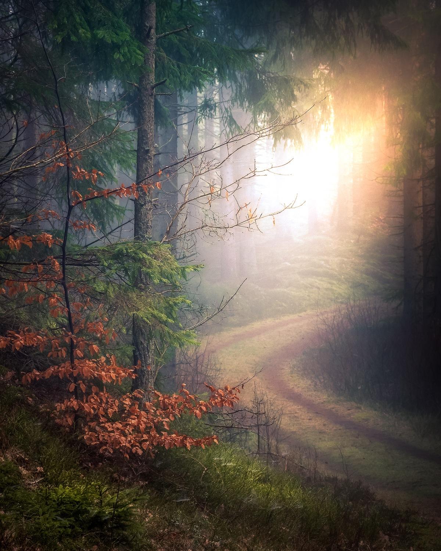 The path to the light by Göran Ebenhart
