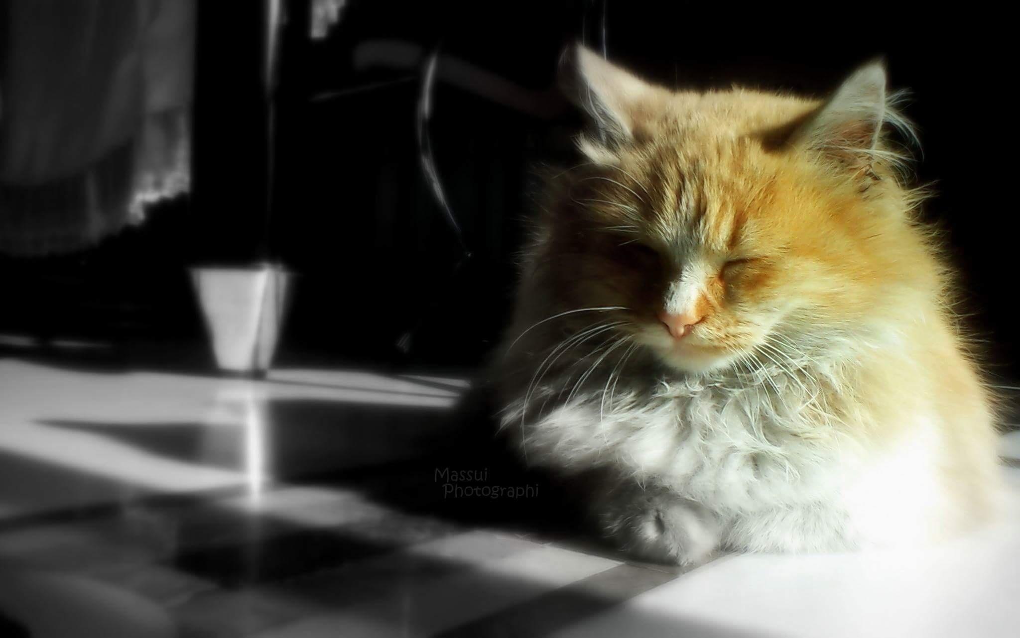 Photo in Animal #yoga #cat