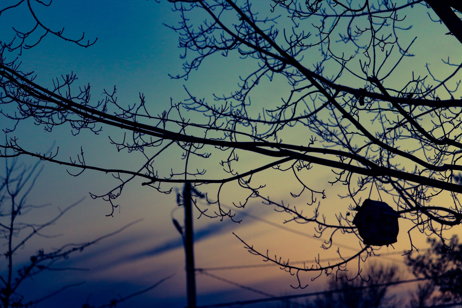 bird house & tree (sunset) by Jessica Dobscha