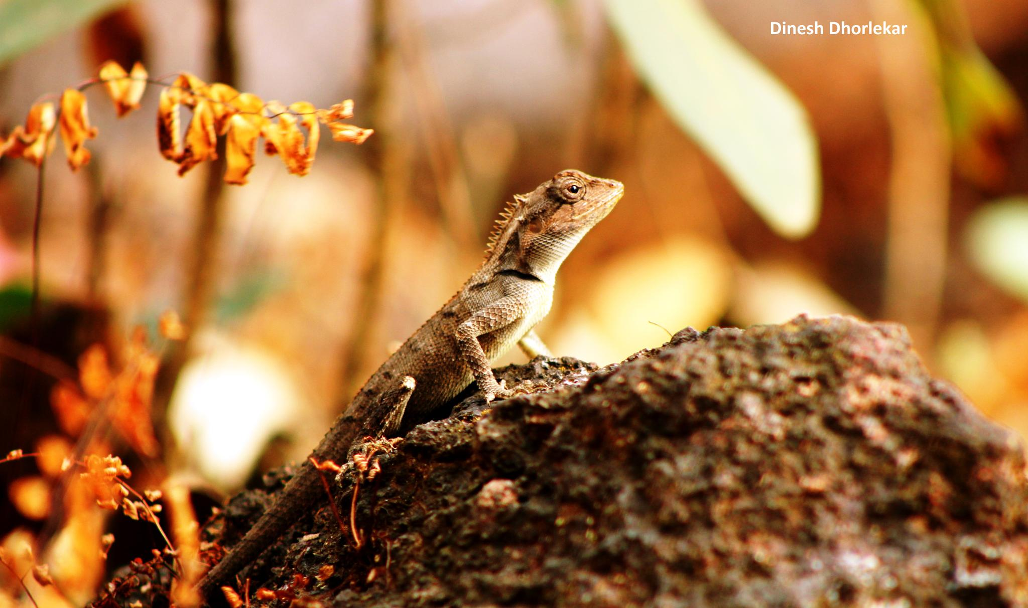 Lizard by D Photography