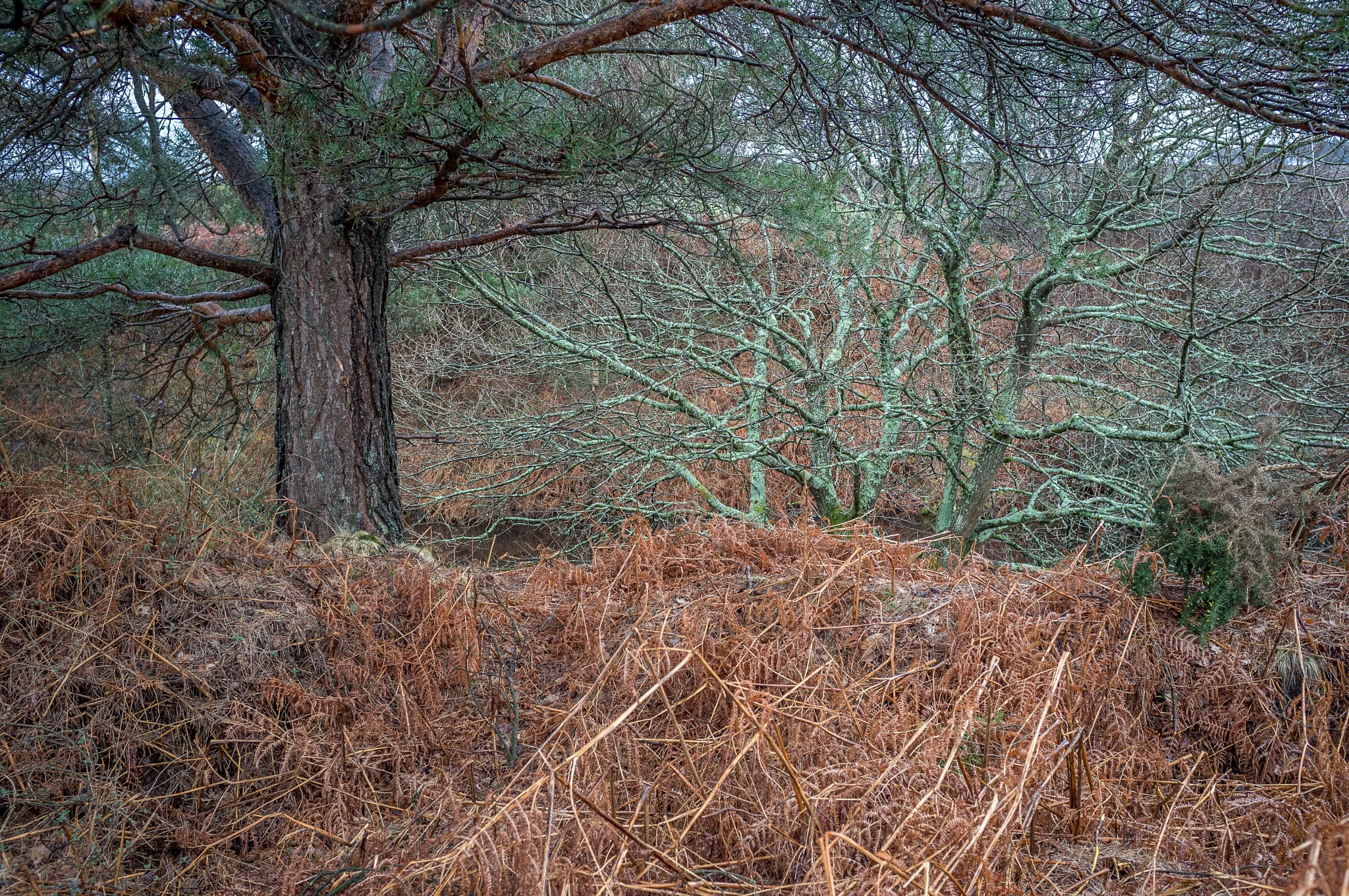 New Forest, Hampshire, UK by NigelMeaby