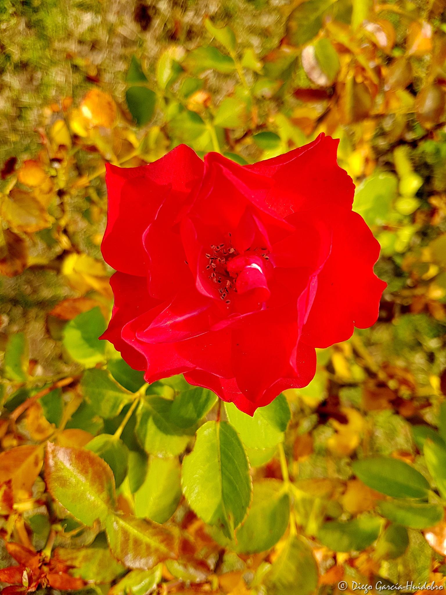 Red in Autumn by Diego García-Huidobro