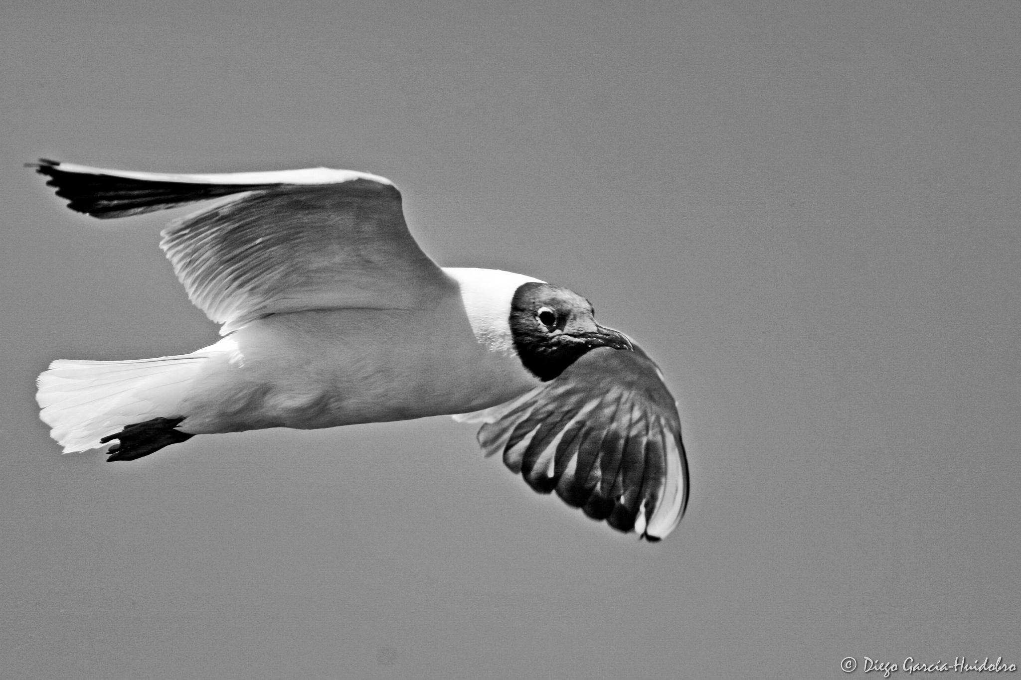 Quiet Flying by Diego García-Huidobro