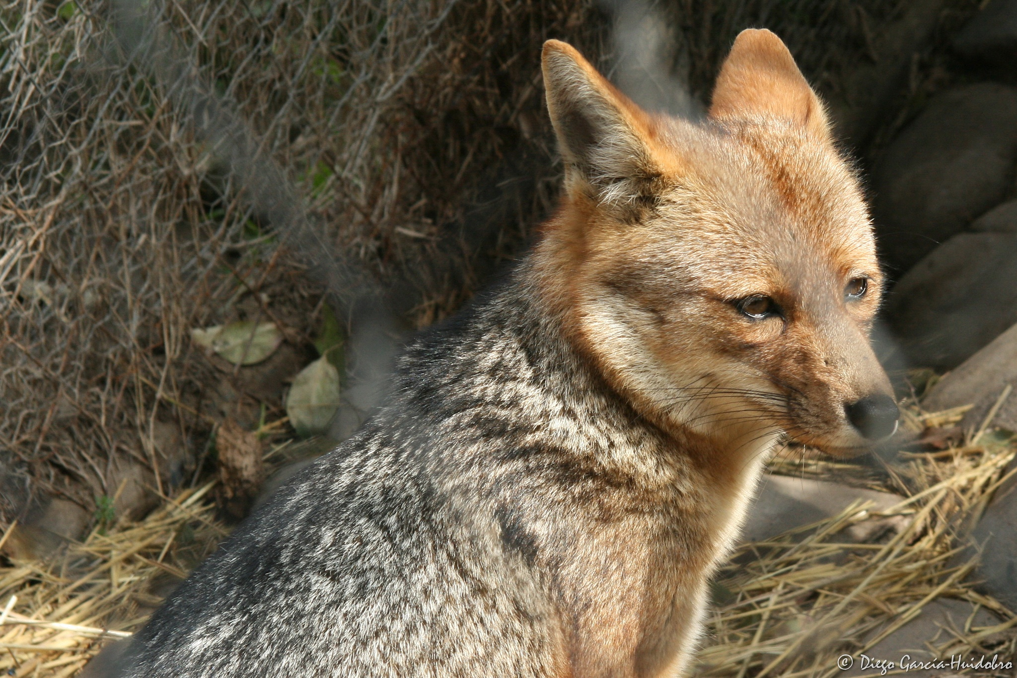 Photo in Animal #animal #fox