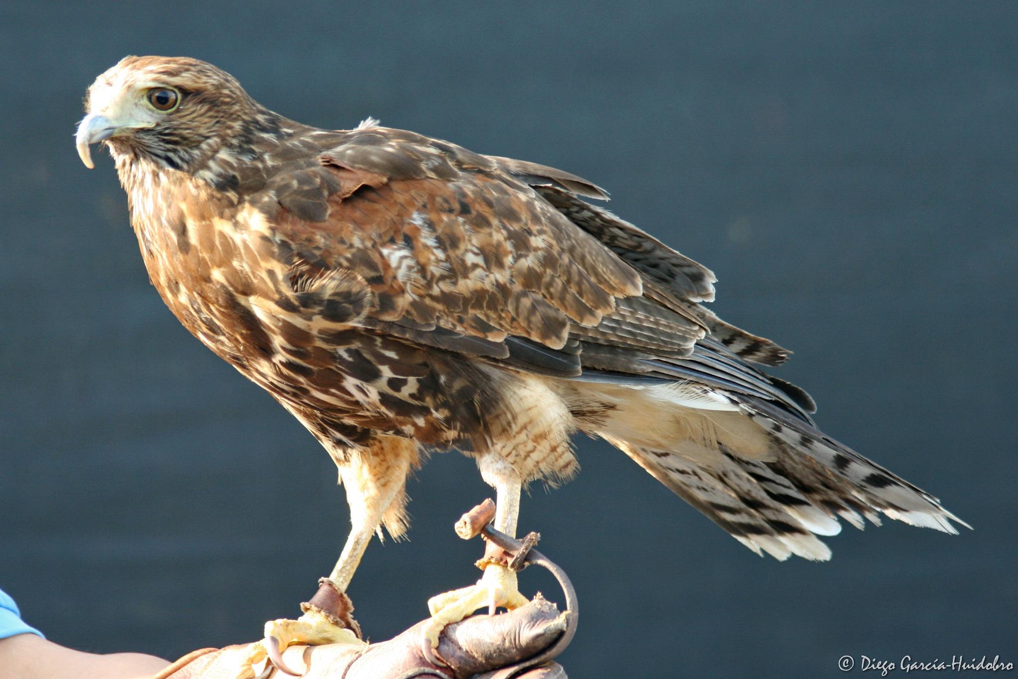 Photo in Animal #bird #animal