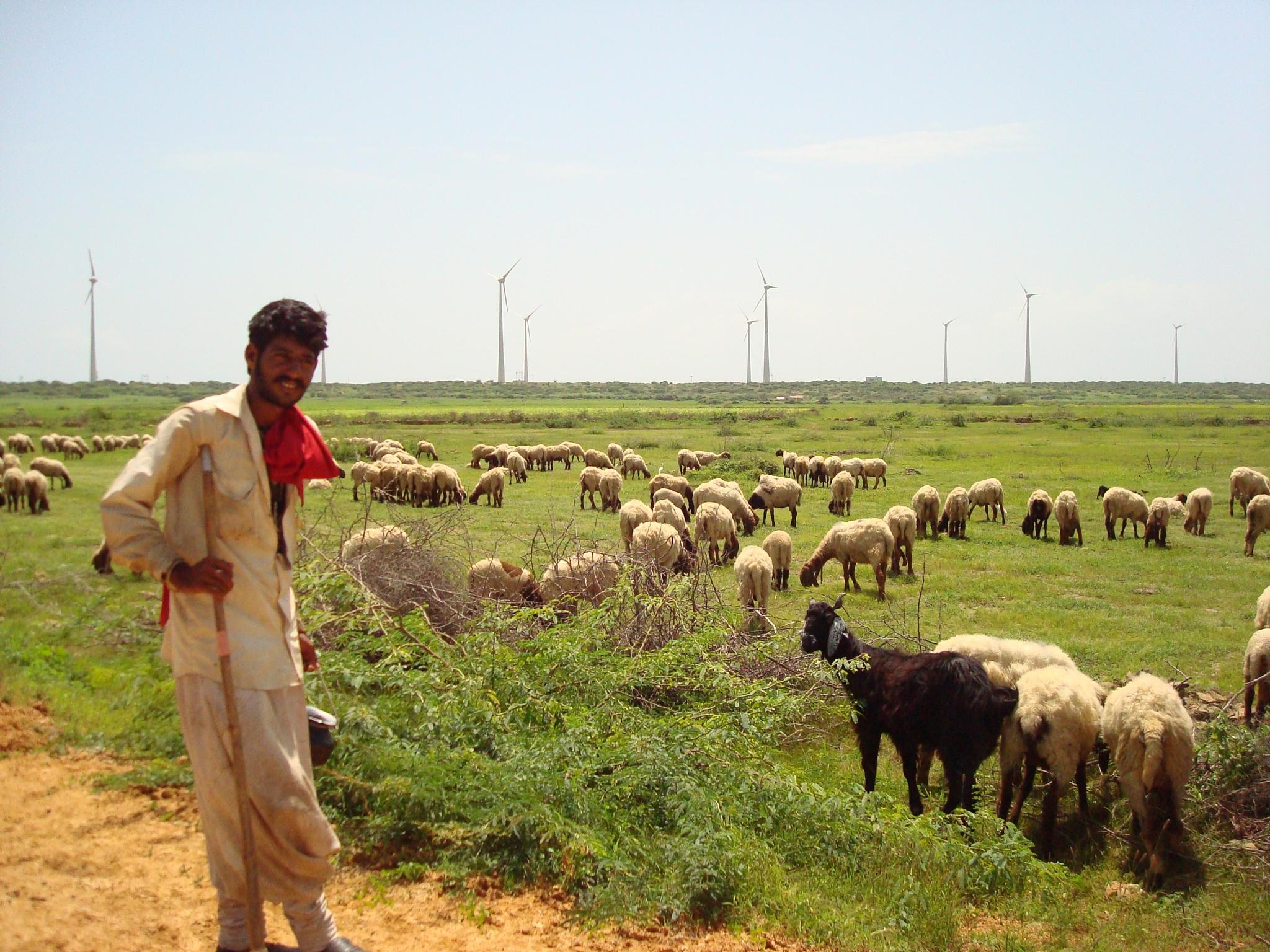 Farmer with his live stock by Shrenik Dodhia