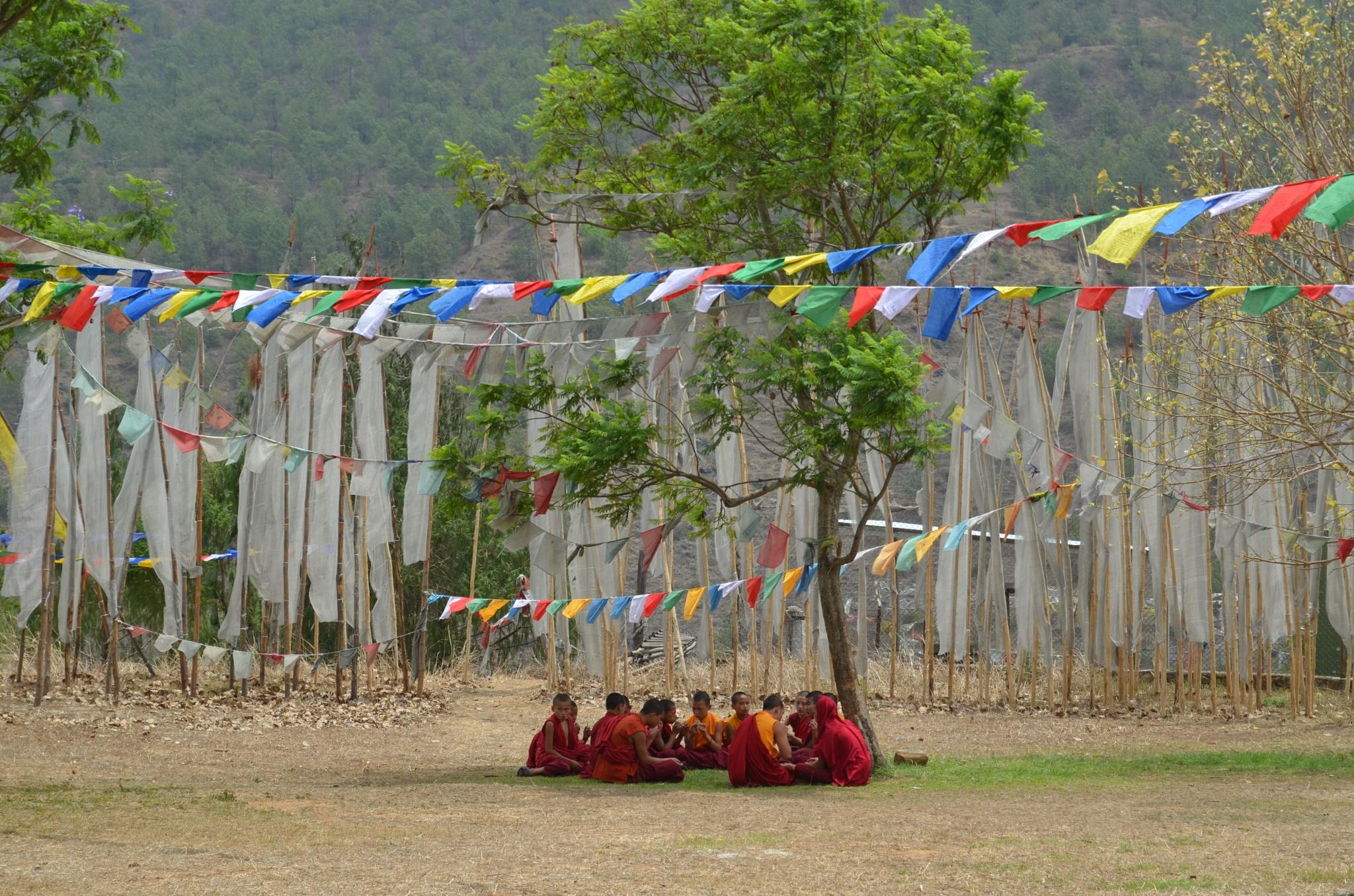 Young Monk by Shrenik Dodhia