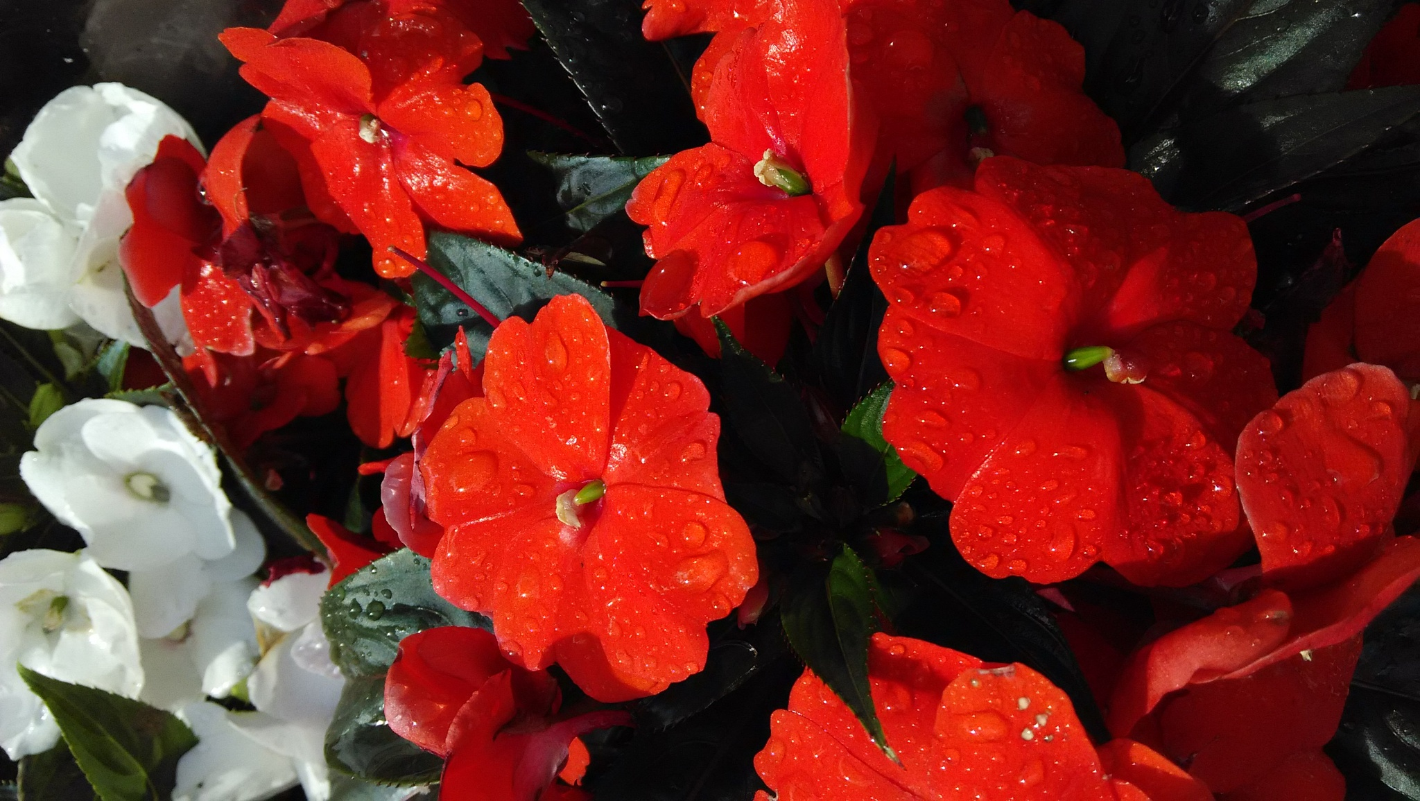 Photo in Nature #rain drops #flowers #germany