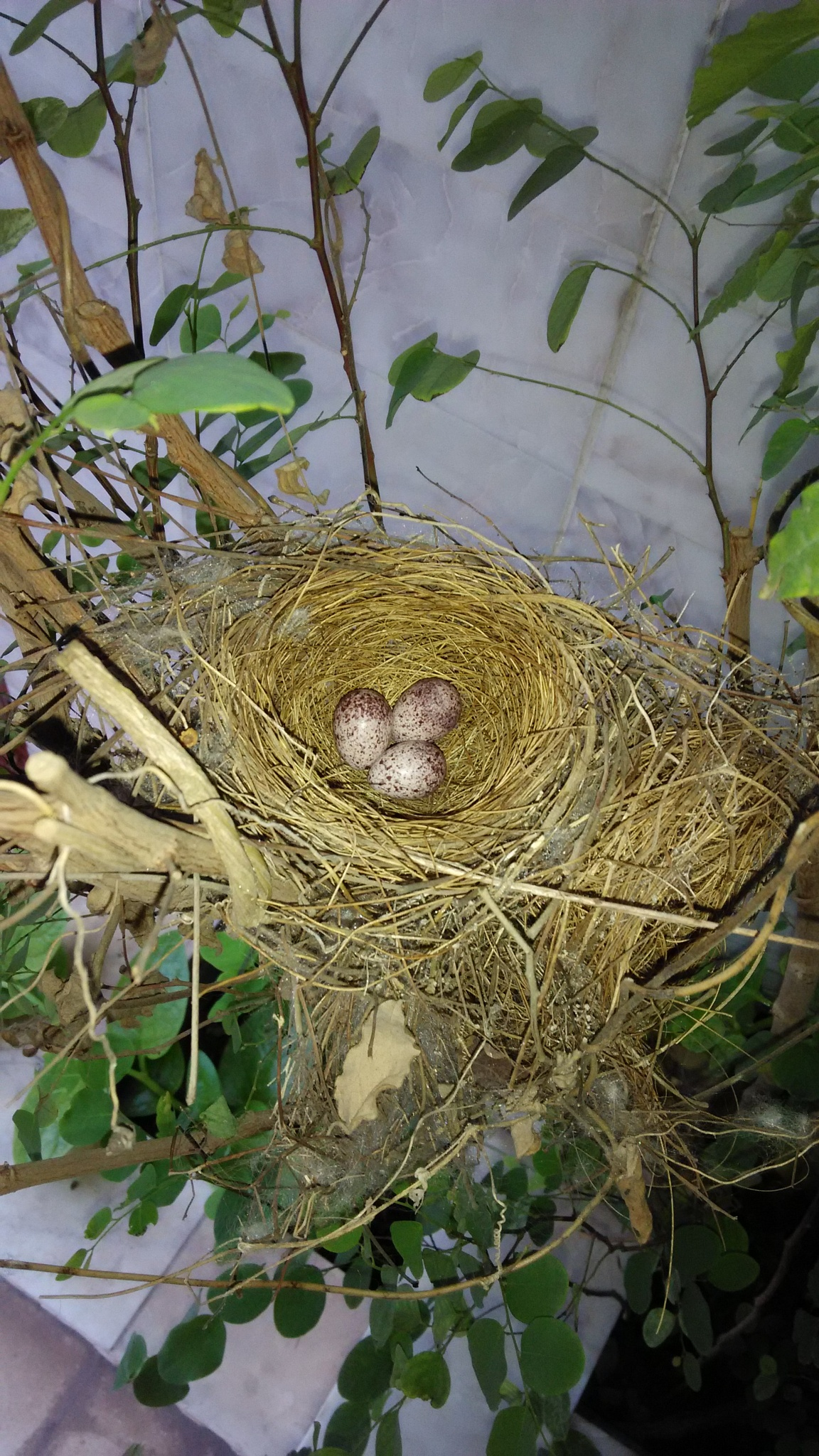 Photo in Nature #nest #farmhouse #india #jamnagar