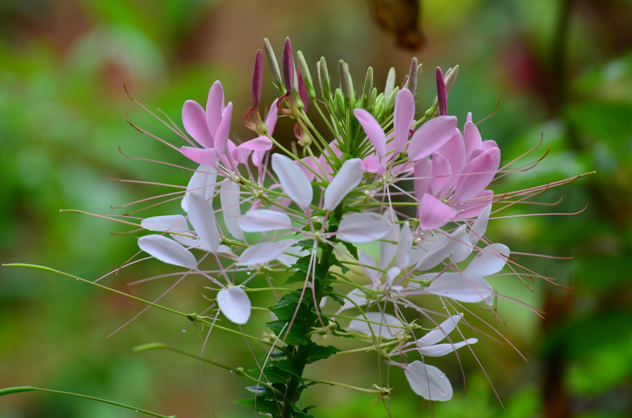 Flower by Shrenik Dodhia