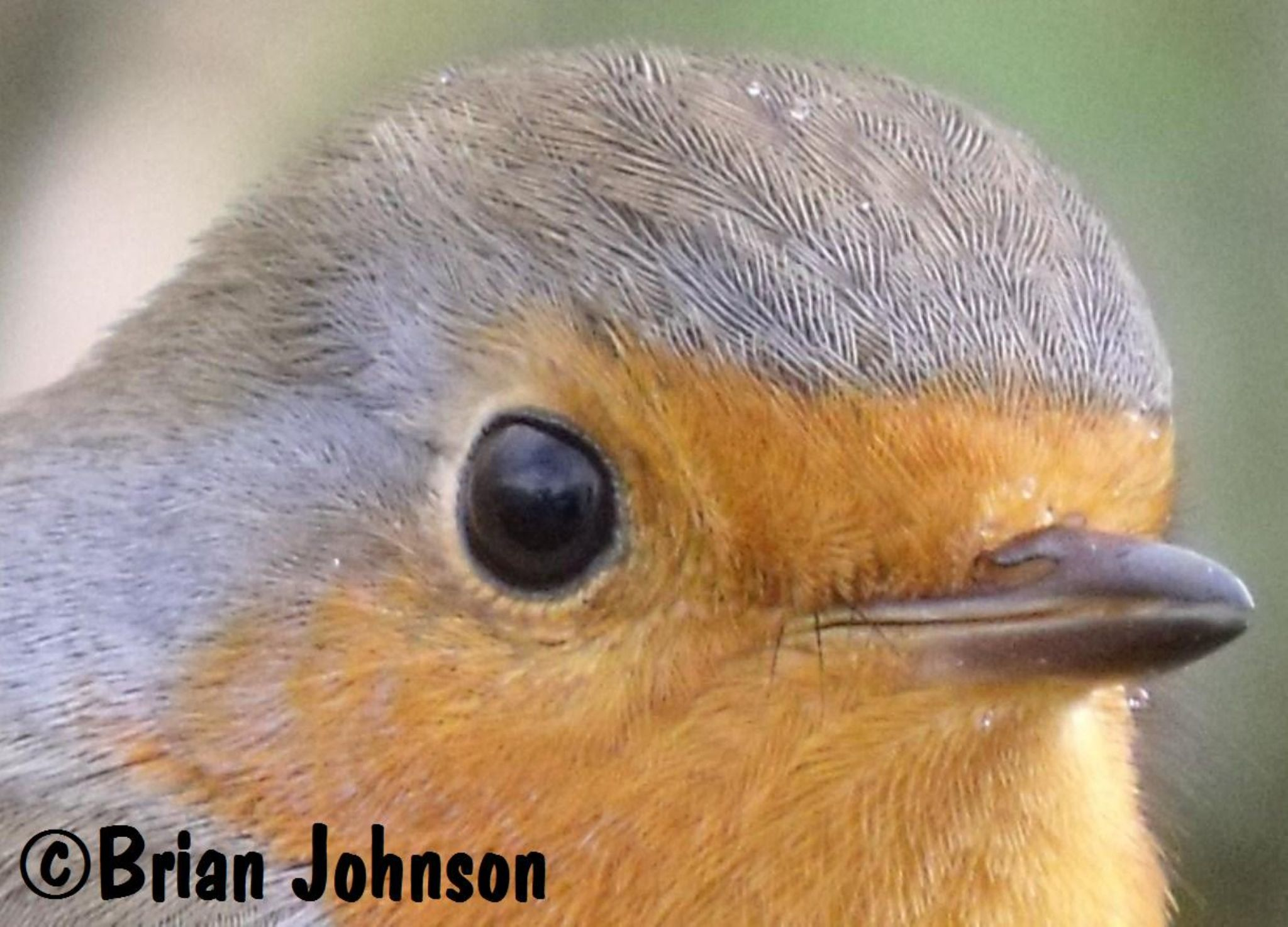 Robin's eye view by Brian Johnson