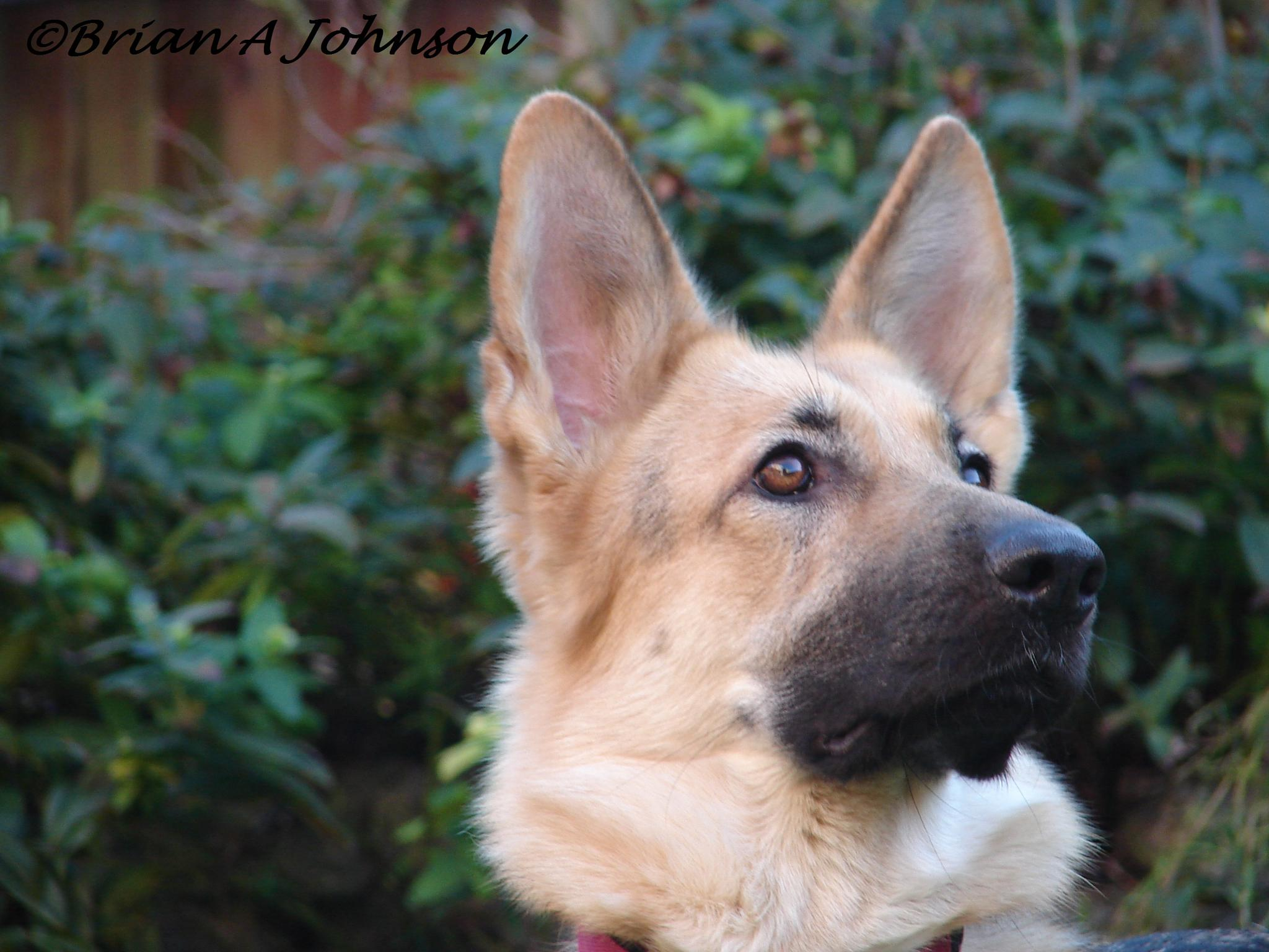 Canine Beauty by Brian Johnson