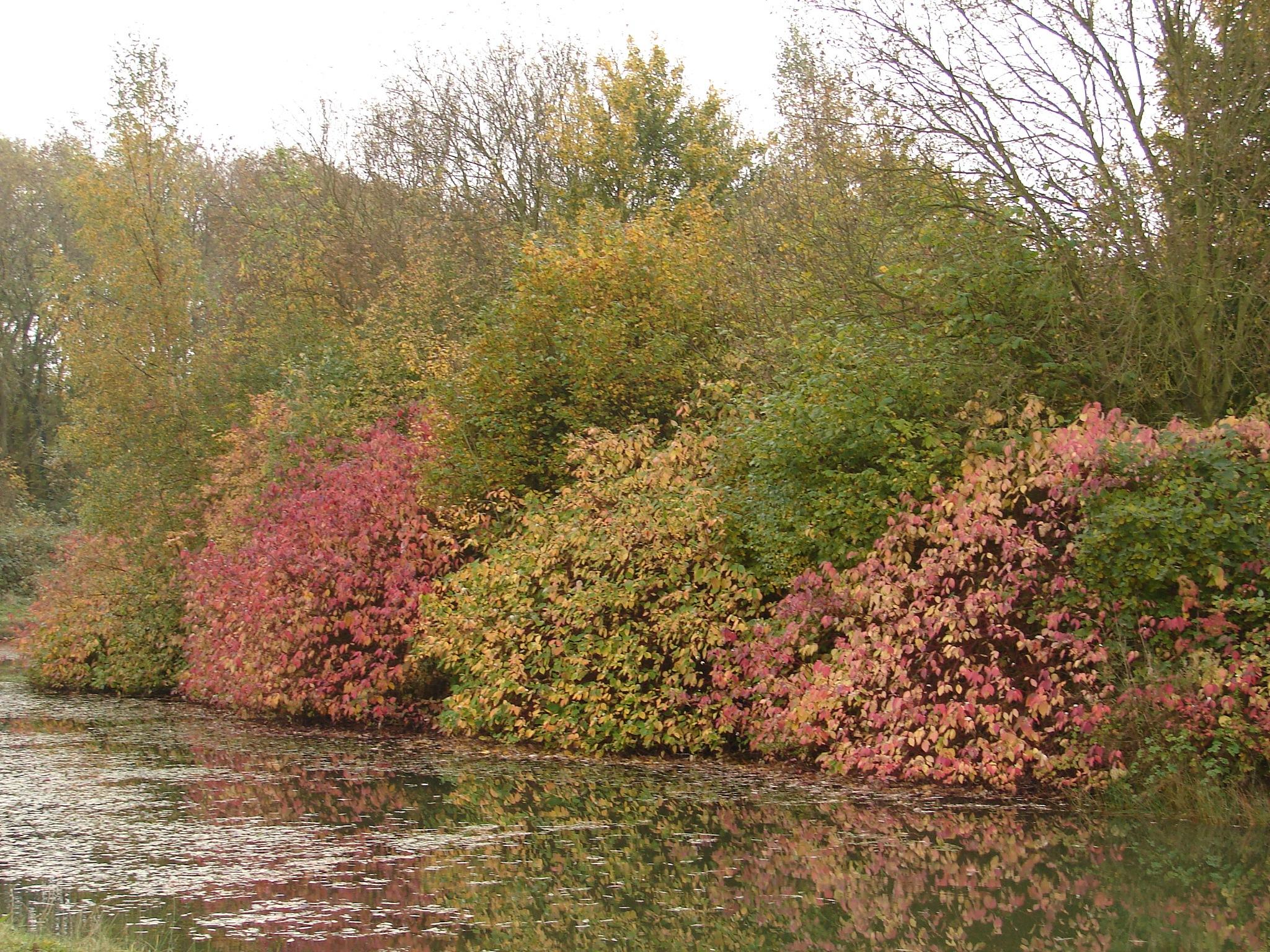 Autumn by Brian Johnson