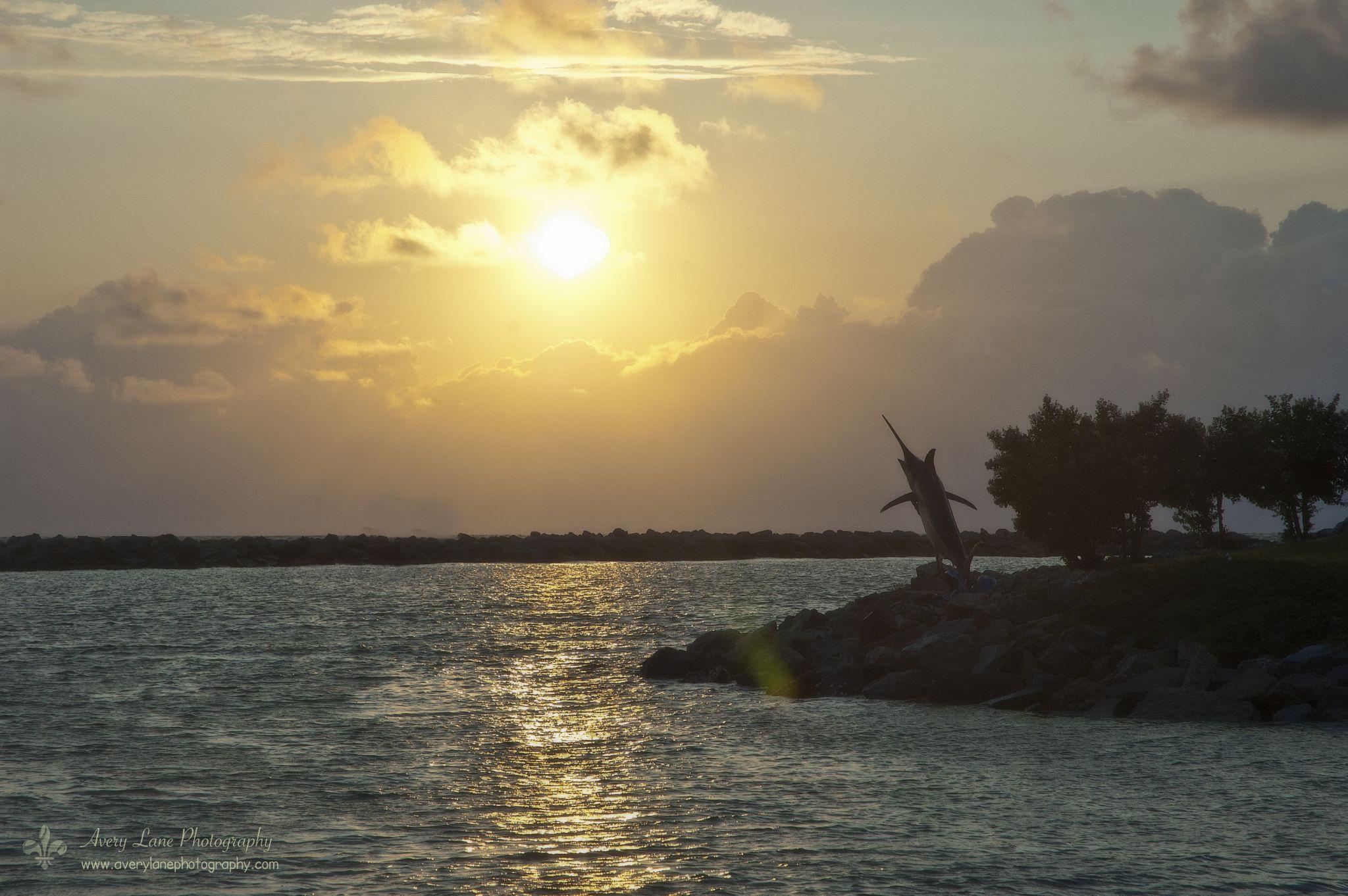 Paradise Sunrise by Lanie Avery