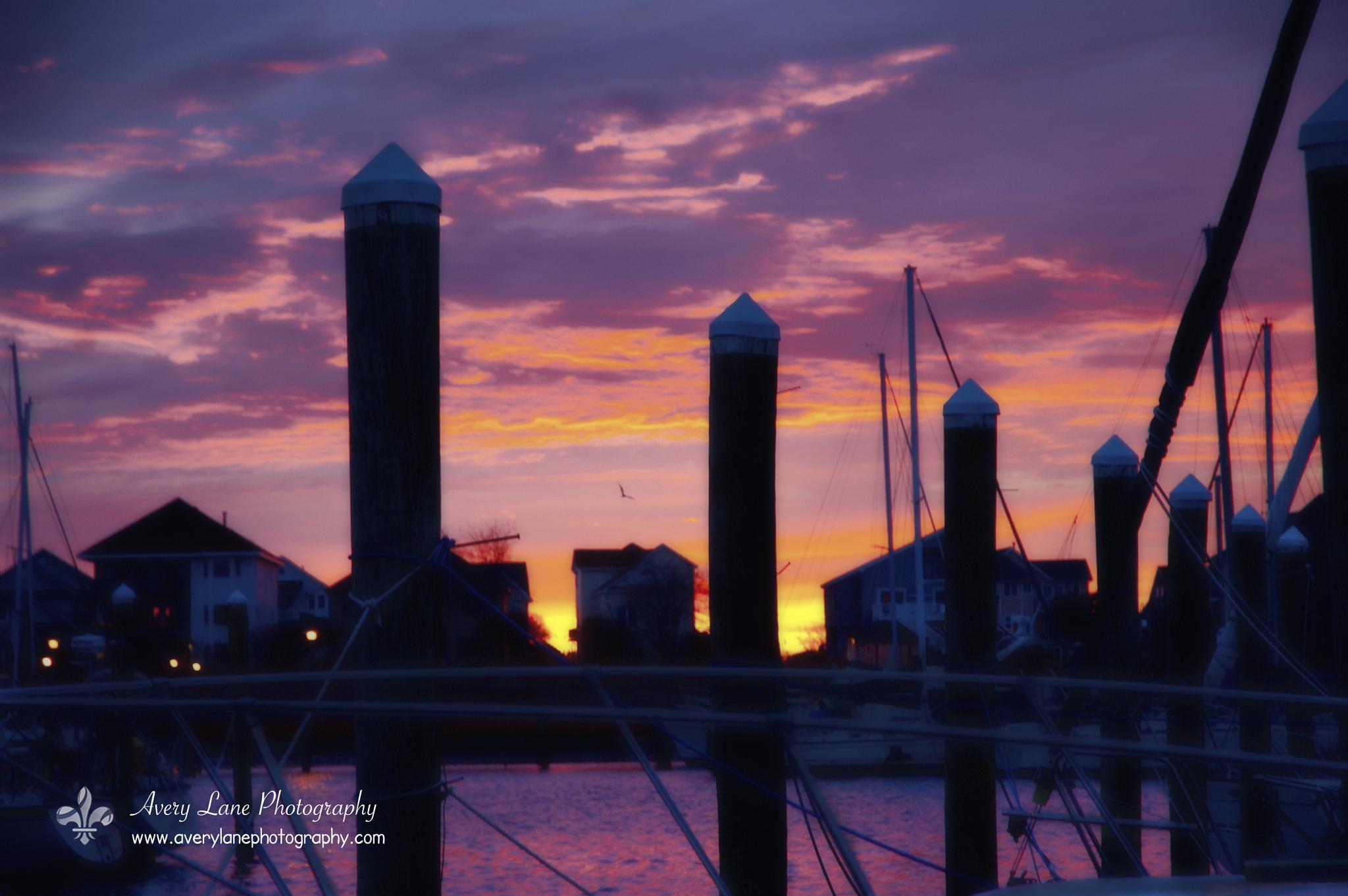 Dawn Flight by Lanie Avery