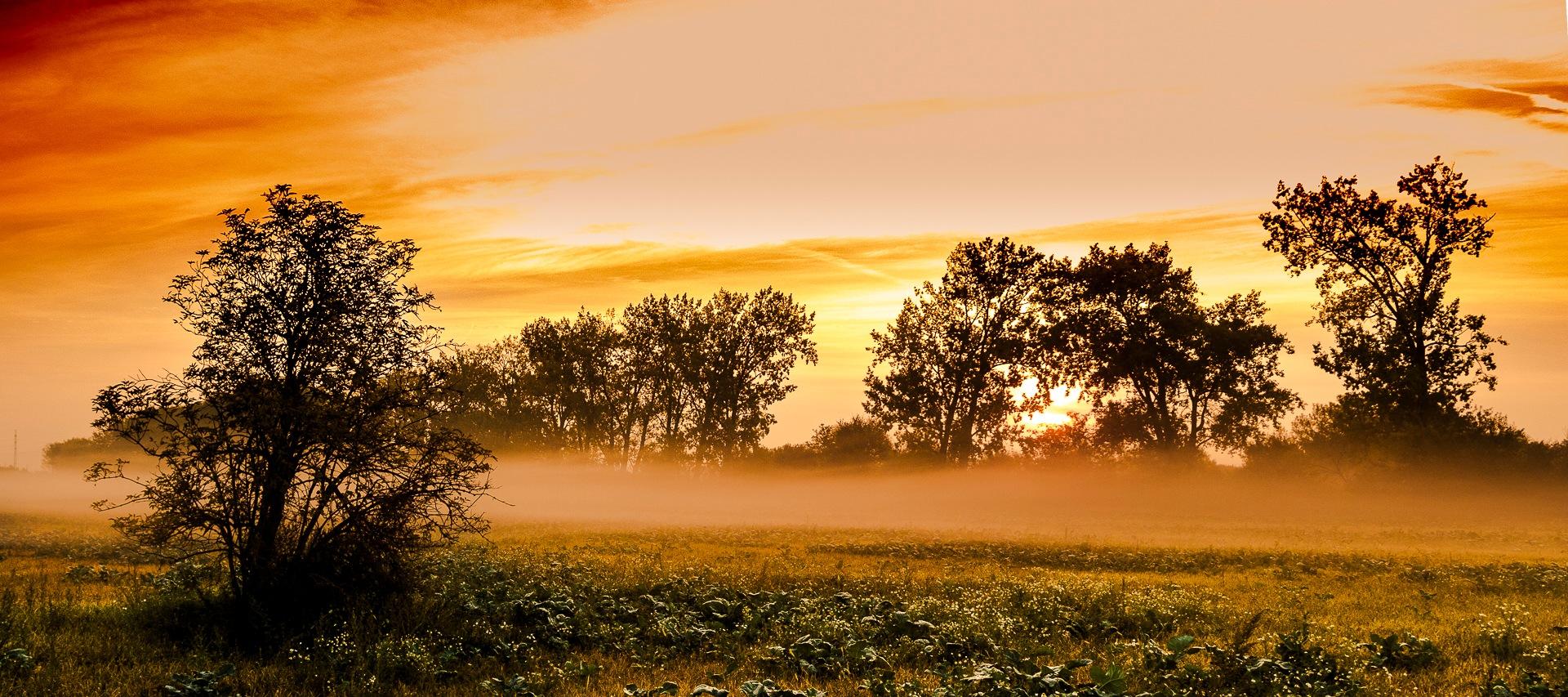 Golden morning by Juraj ČIČATKO